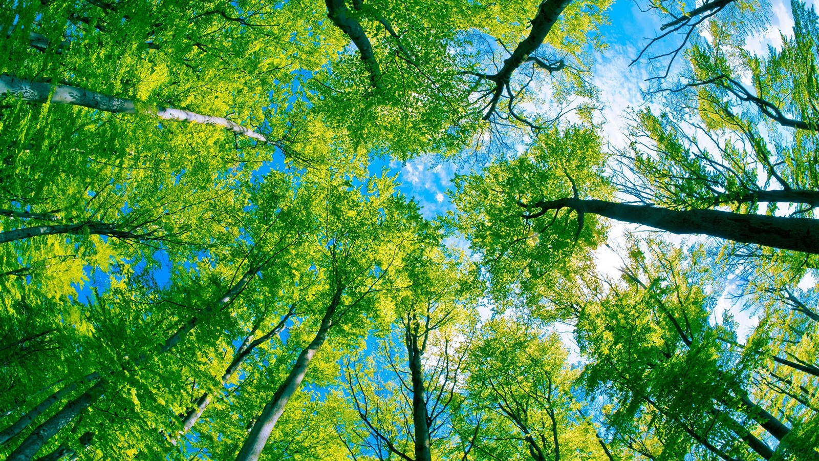 Trees green