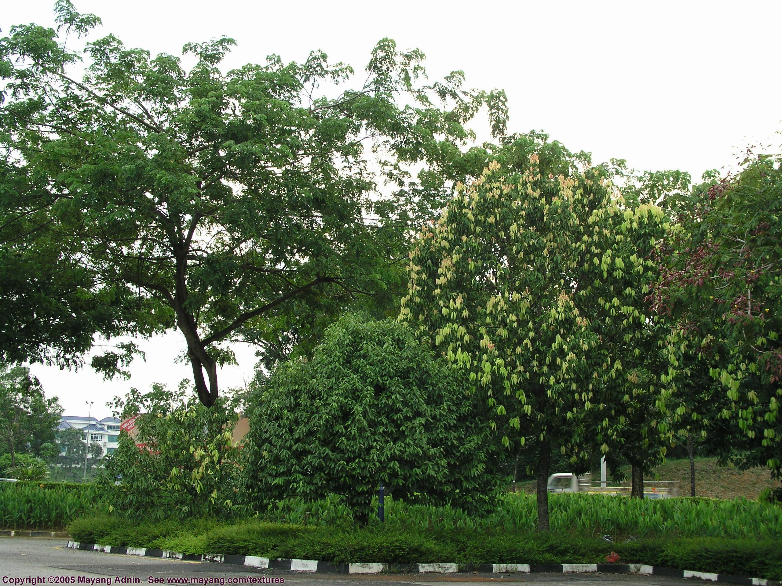 trees texture