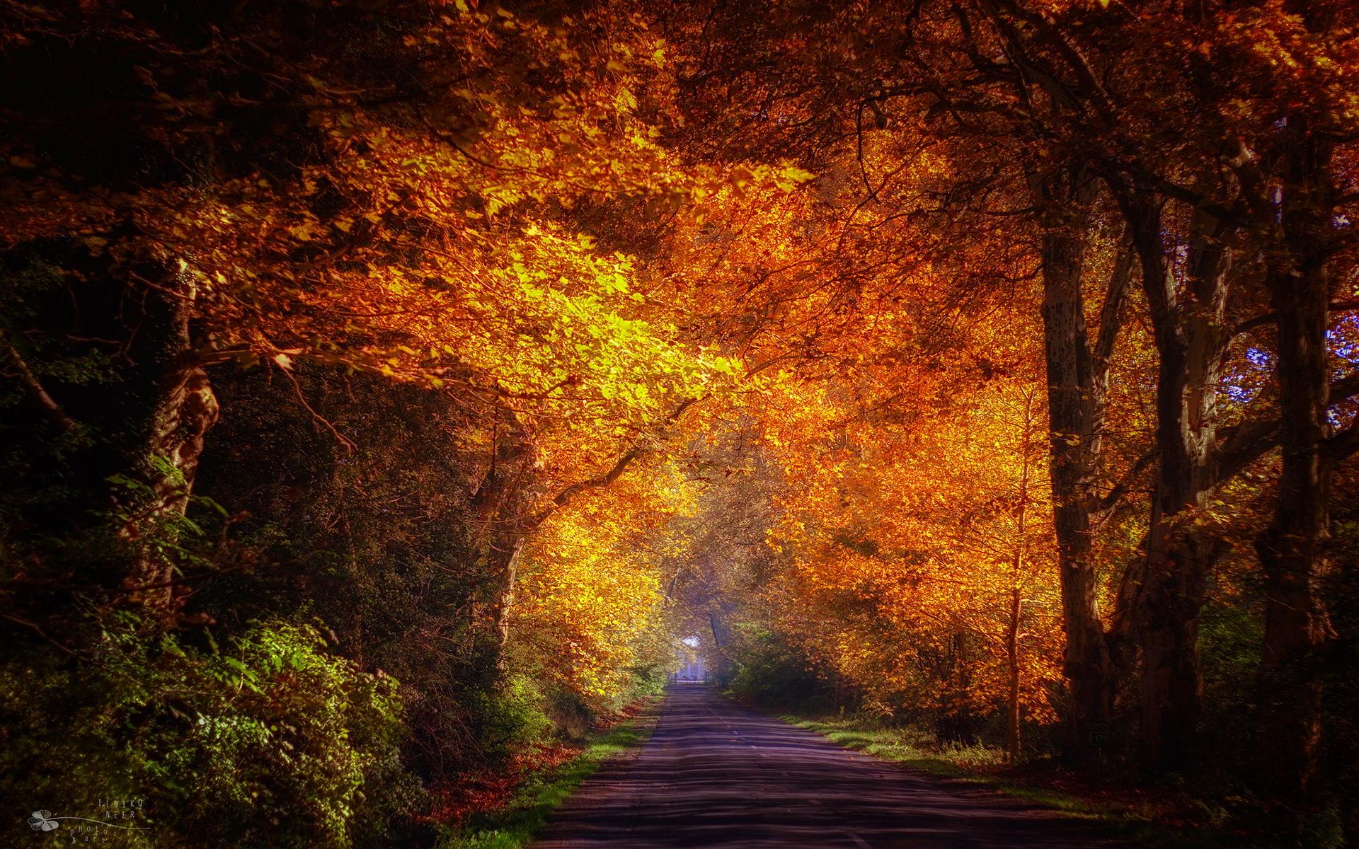 Trees road autumn sunshine