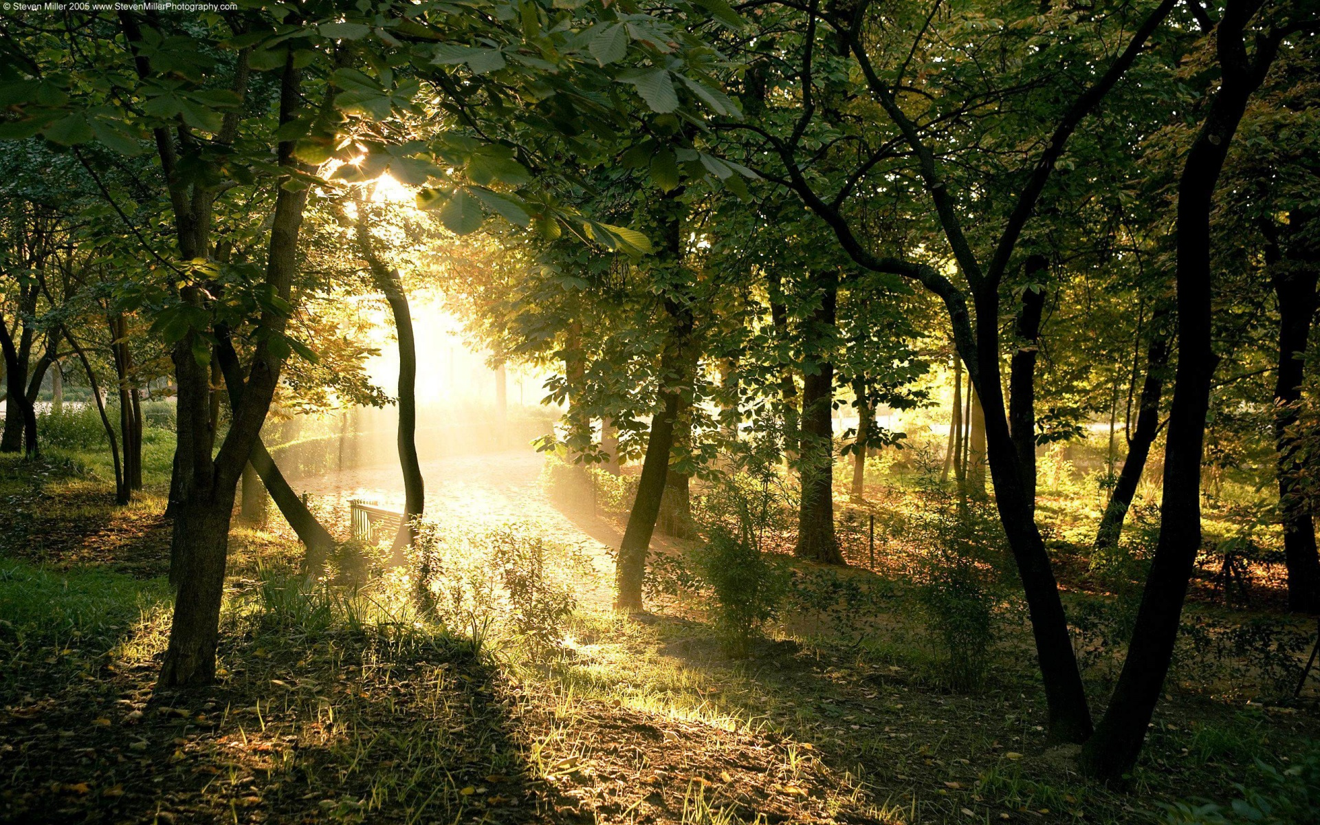 Light Into Trees S Desktop Wallpaper