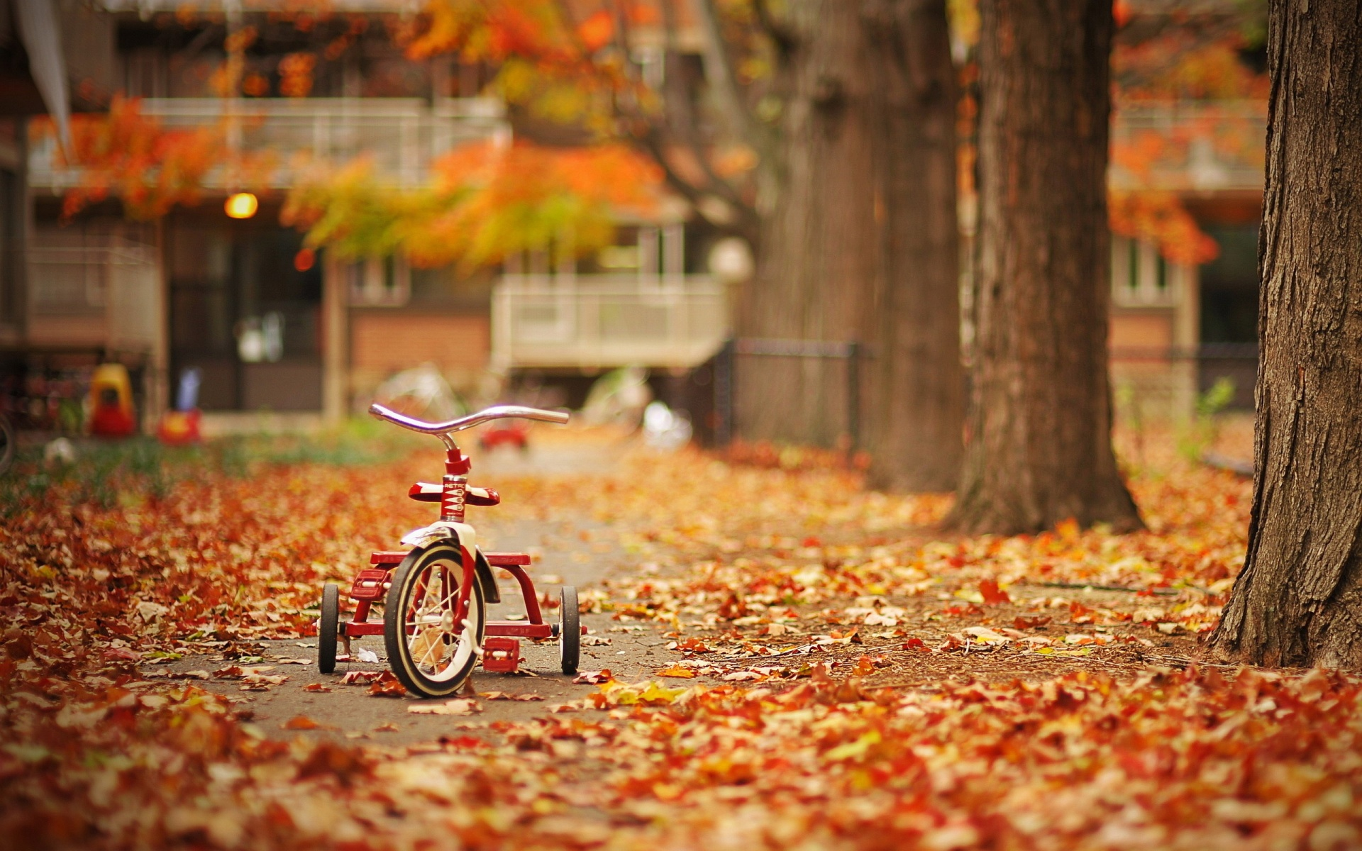Tricycle in Autumn