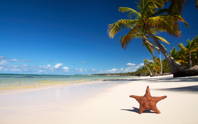 Tropical beach starfish