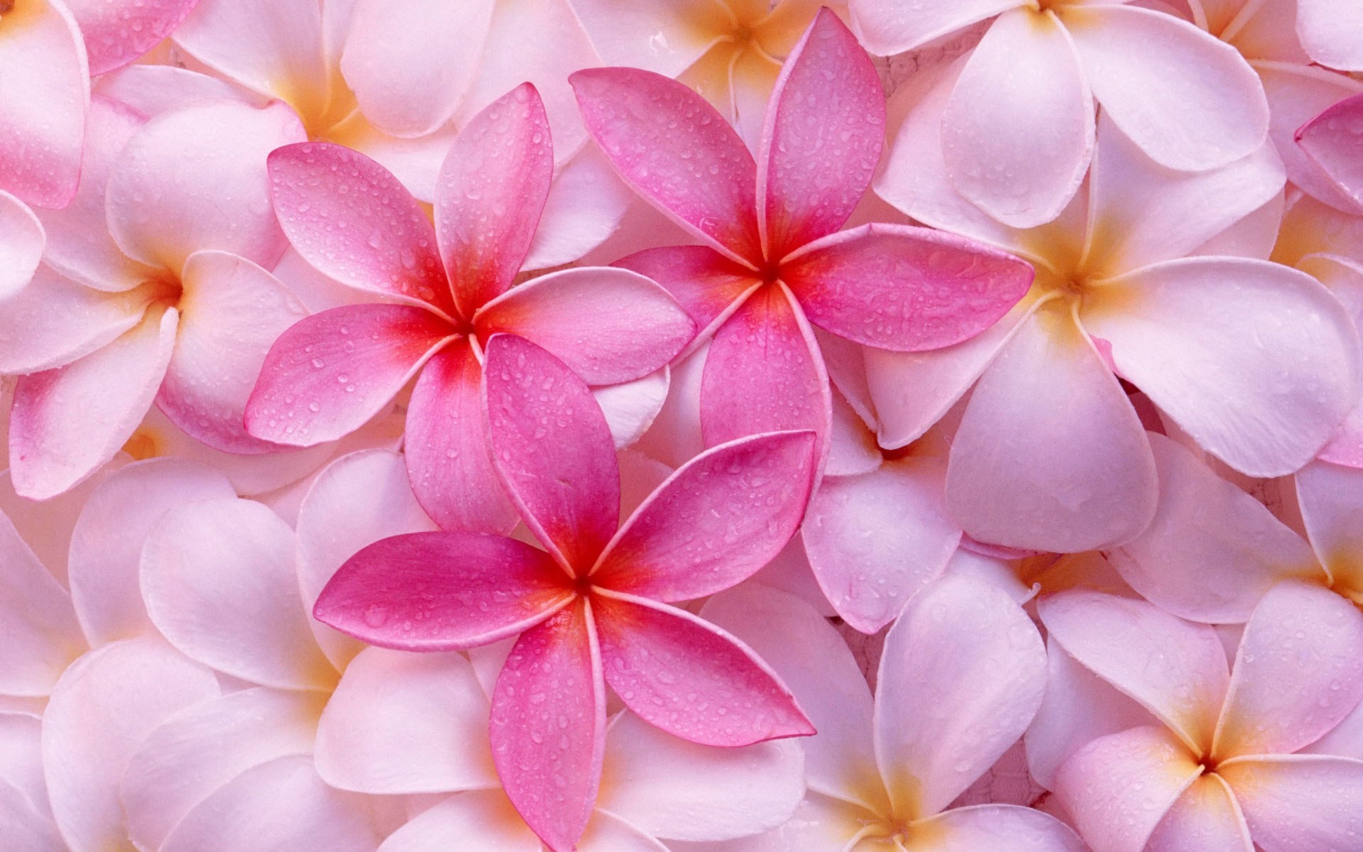 Tropical Flowers Wallpaper