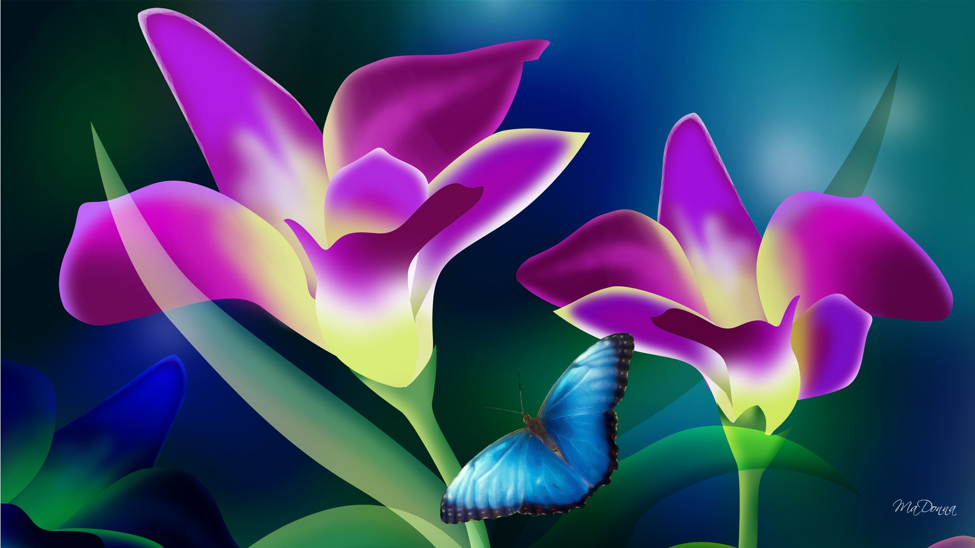 tropical flower wallpapers - photo #37