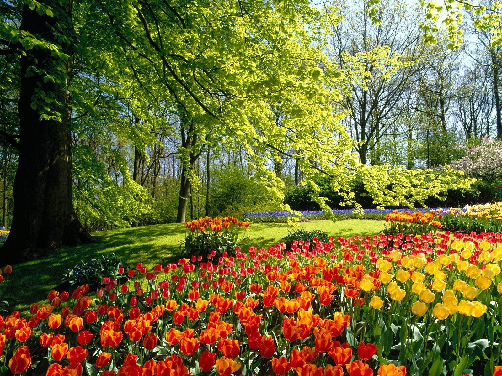 Related Wallpapers. Tulip Field ...