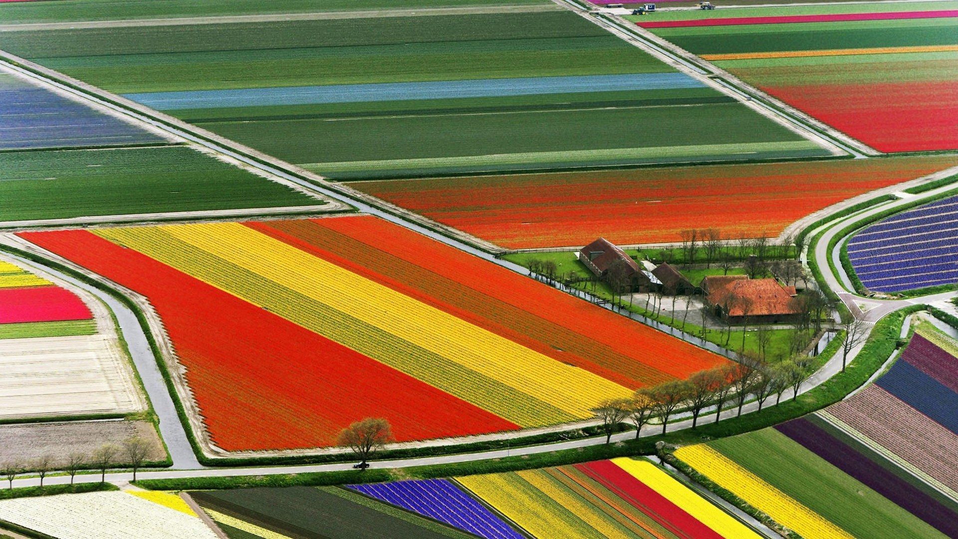 Tulip Fields Wallpaper 1920x1080 55458