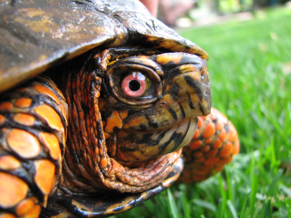 Turtle Close-Up
