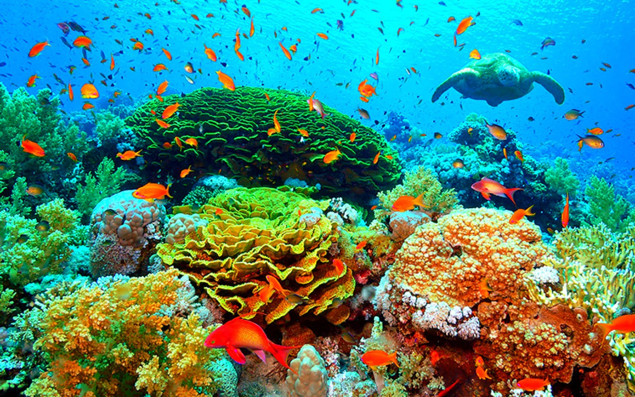 Underwater beauty turtle corals fish reef 1280x800