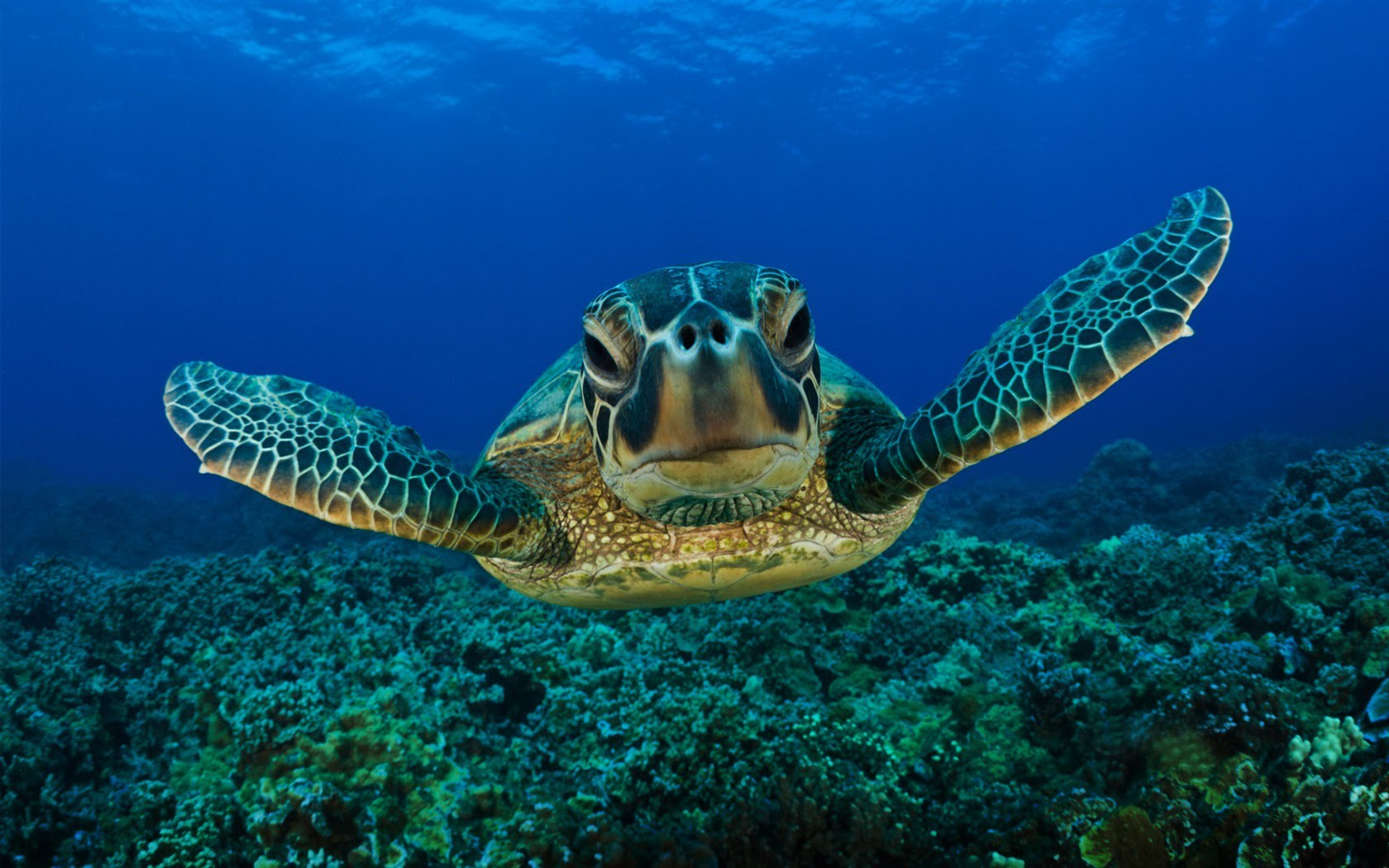 Amazing Underwater Sea Turtle HD