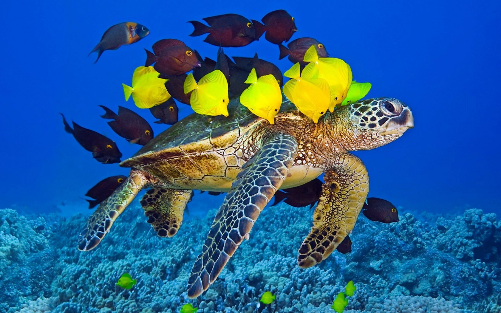 Turtle Yellow Fish Underwater Ocean