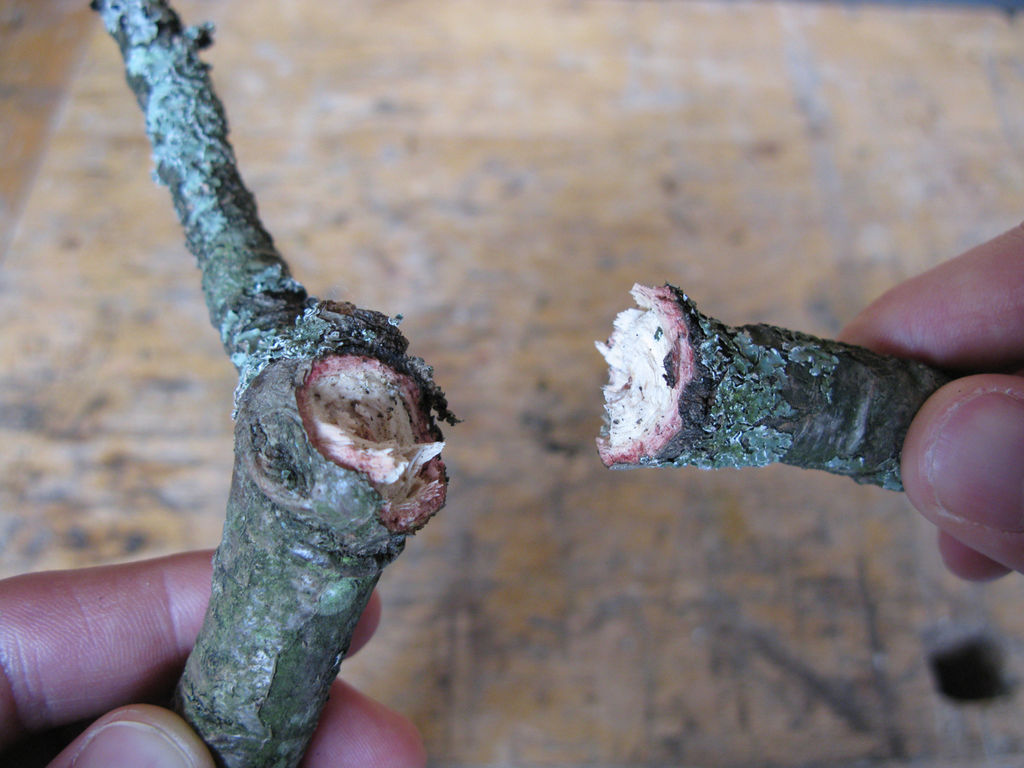 break the twig to size. You could make a shallow cut into the twig to ensure you get the break exactly where you want it
