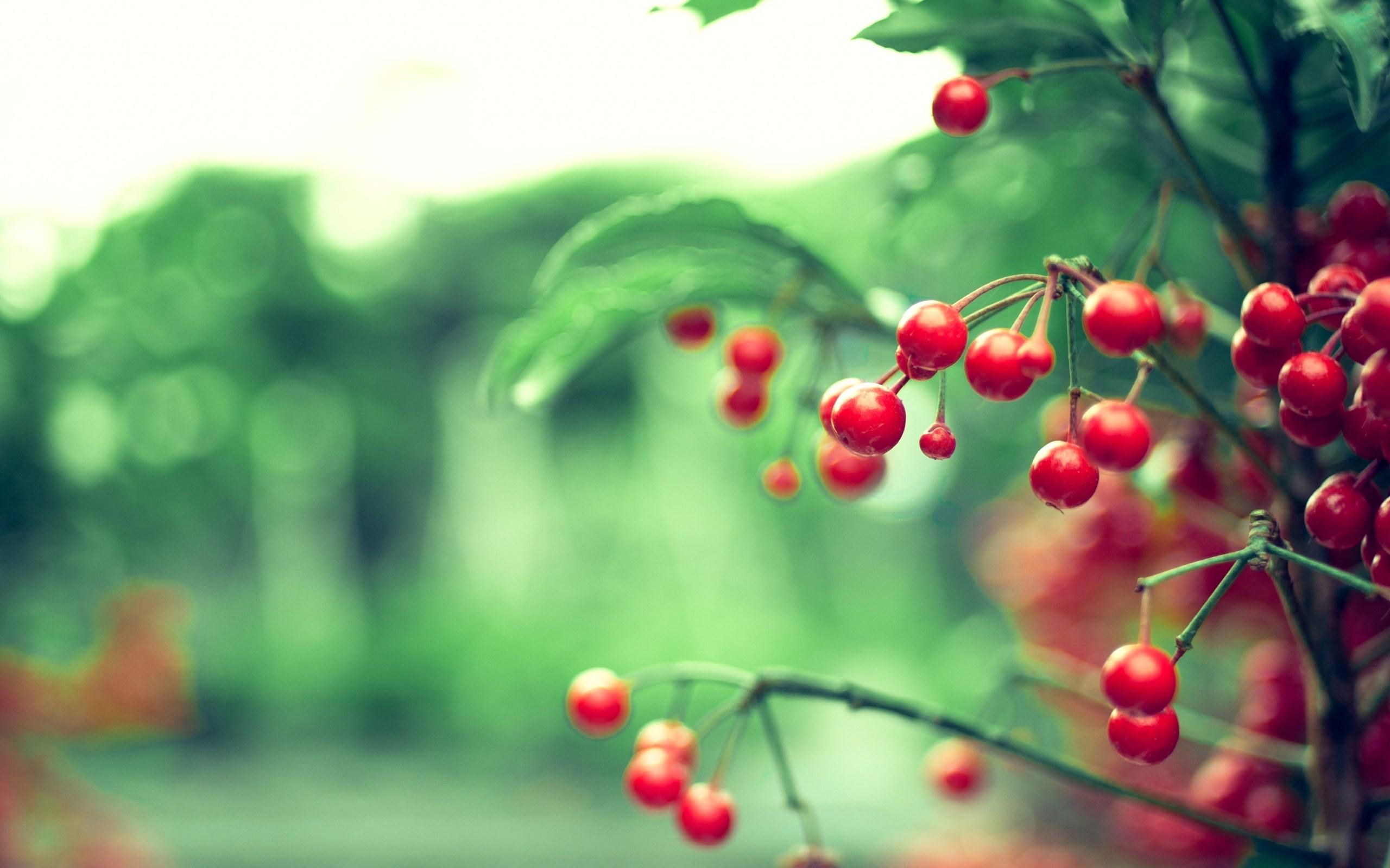 Twig Red Berries Leaves Nature Blur