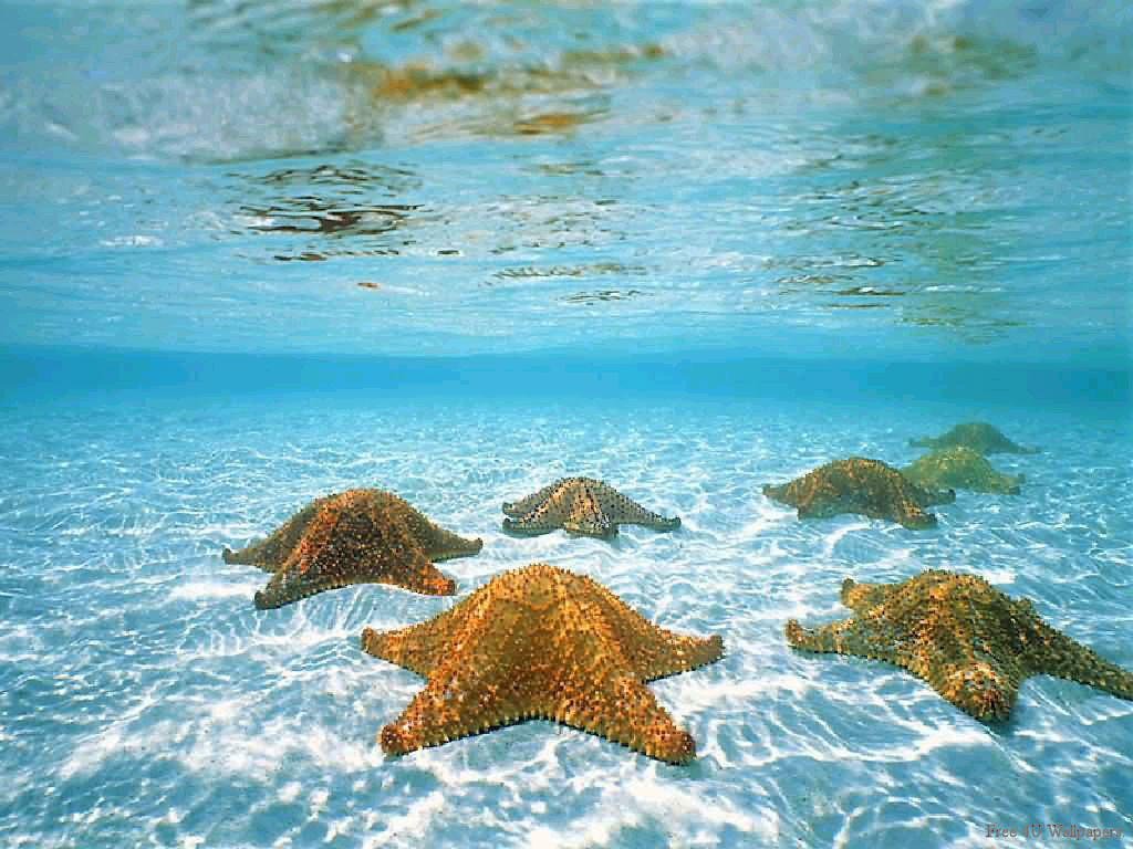 Underwater - underwater-photography Wallpaper