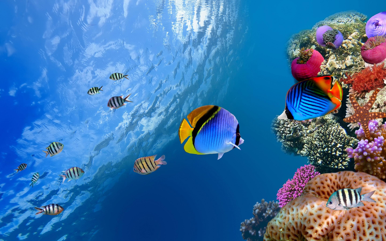 Free Underwater Wallpaper 21215