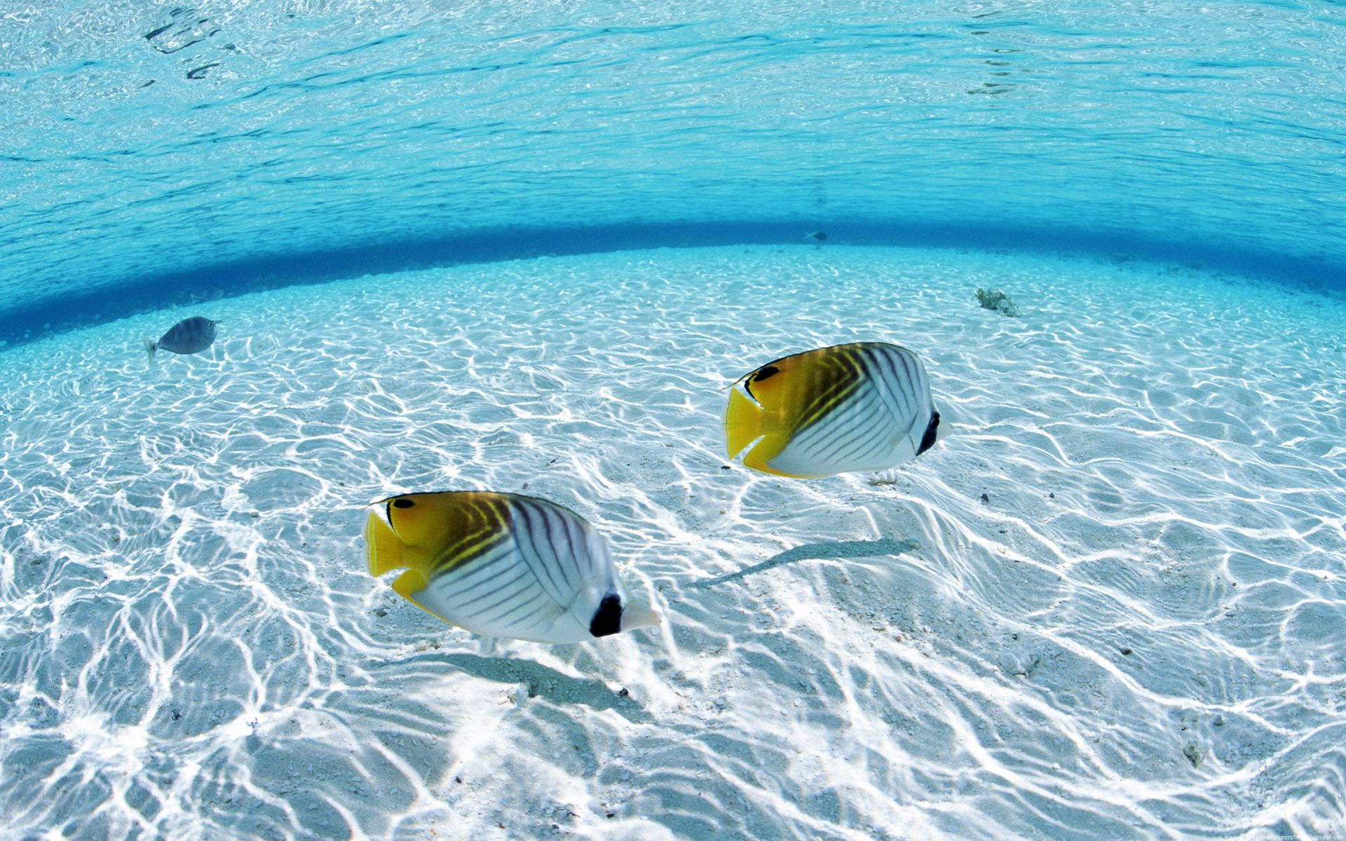Underwater Wallpaper Image HD Background