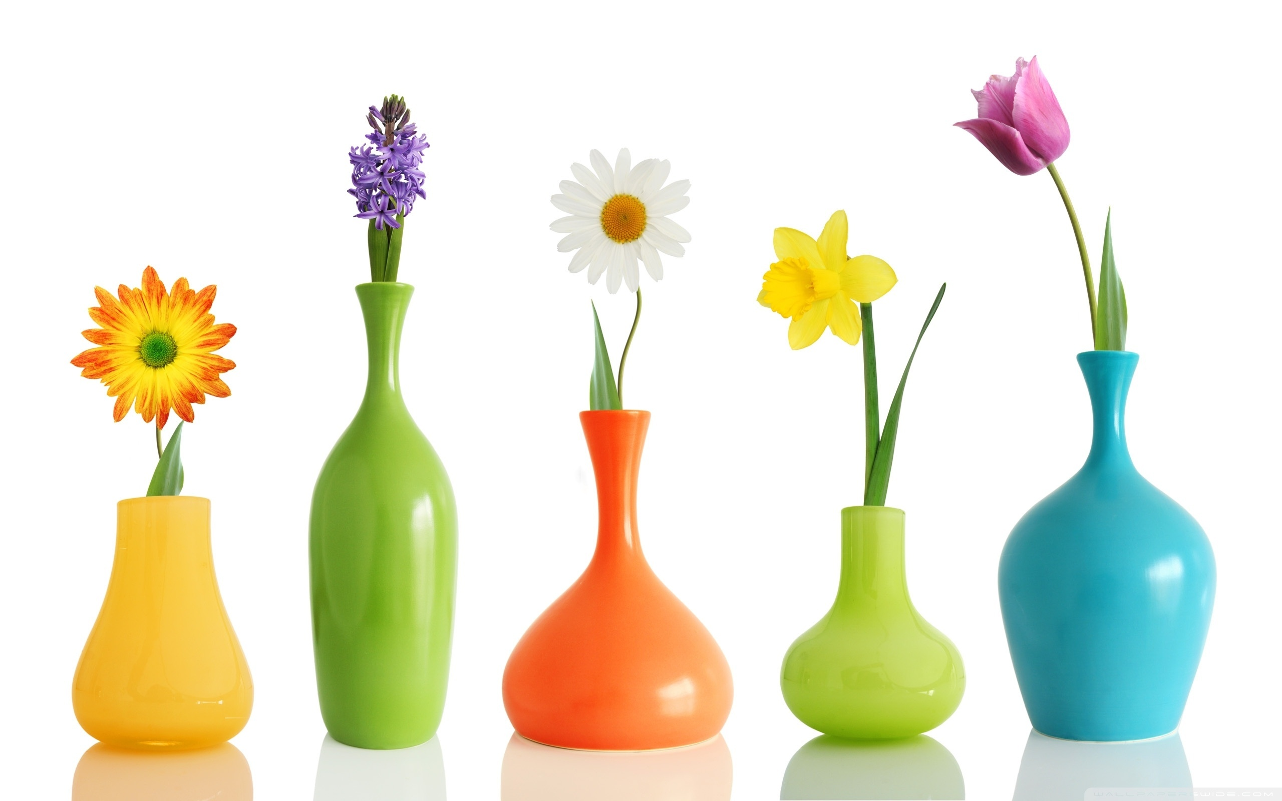 There are generally four types of vases. These are traditional ones, cylindrical, flat and bottle pots.