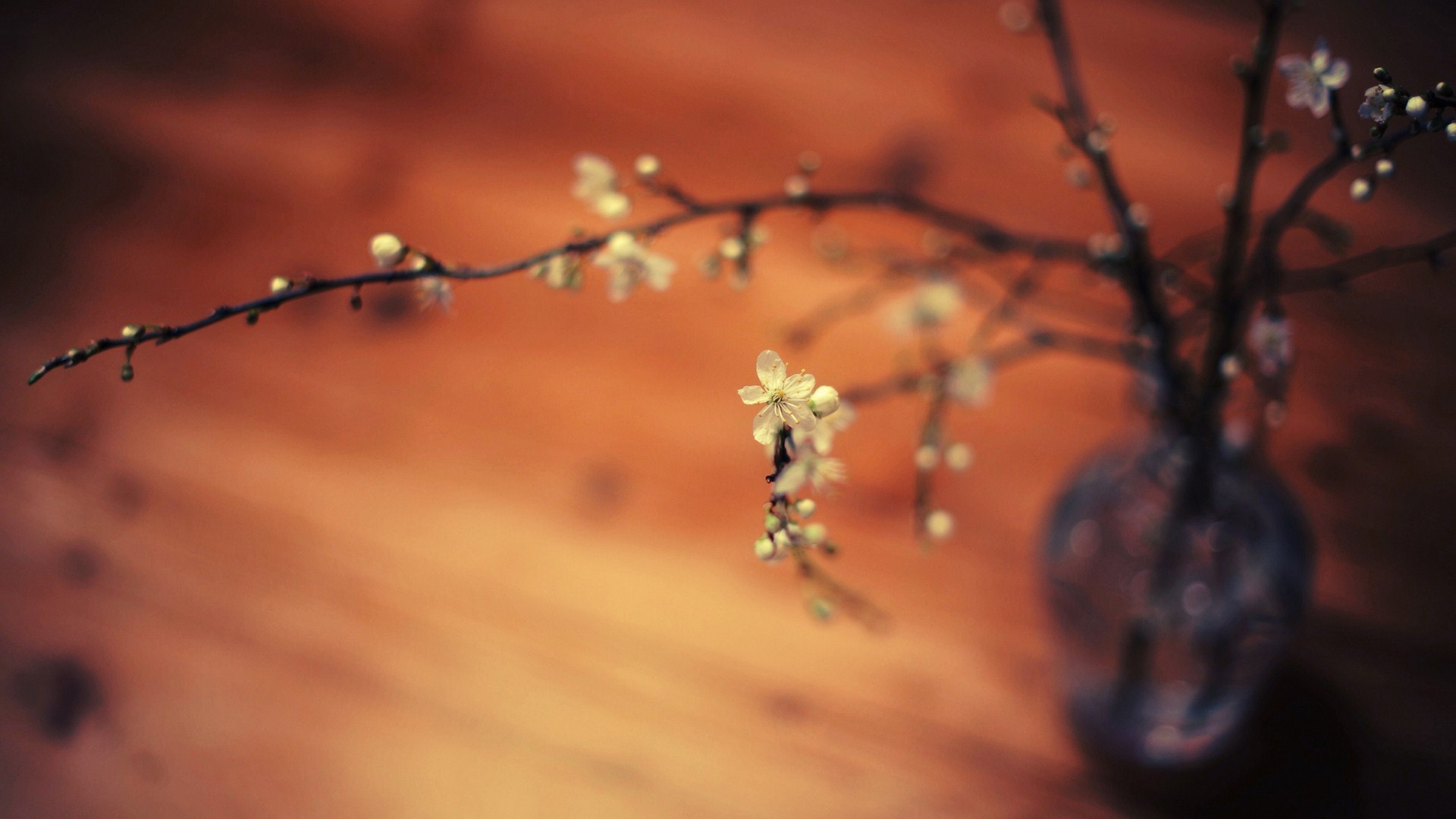 Vase Branches Flowers Macro HD Wallpaper