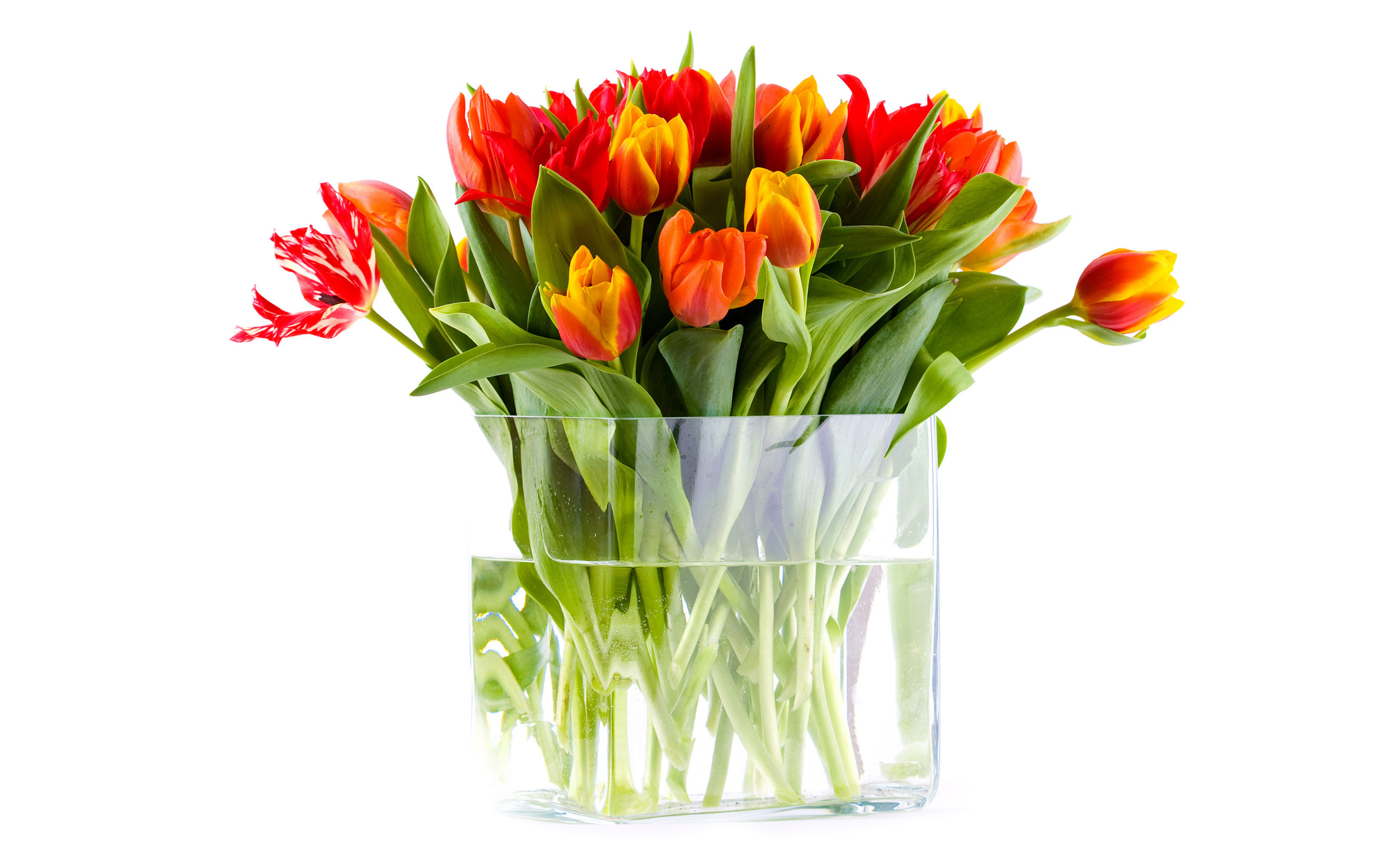 how to care in flowers in vase glass