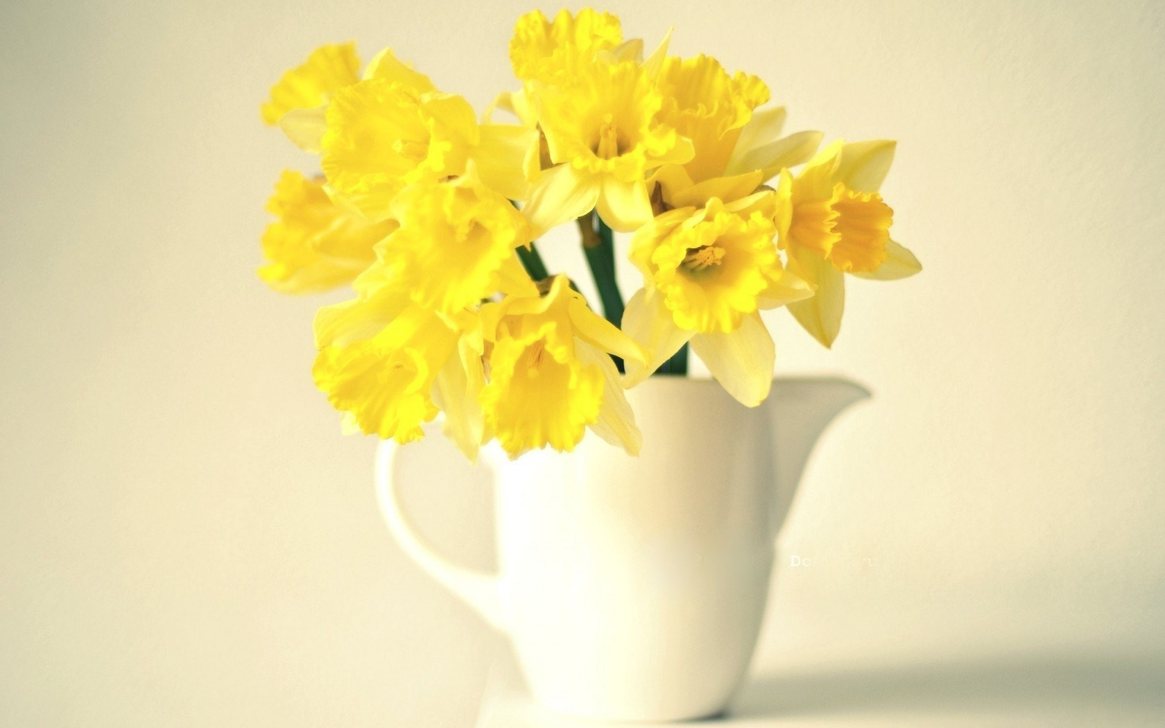 Vase Narcissus Yellow Flowers