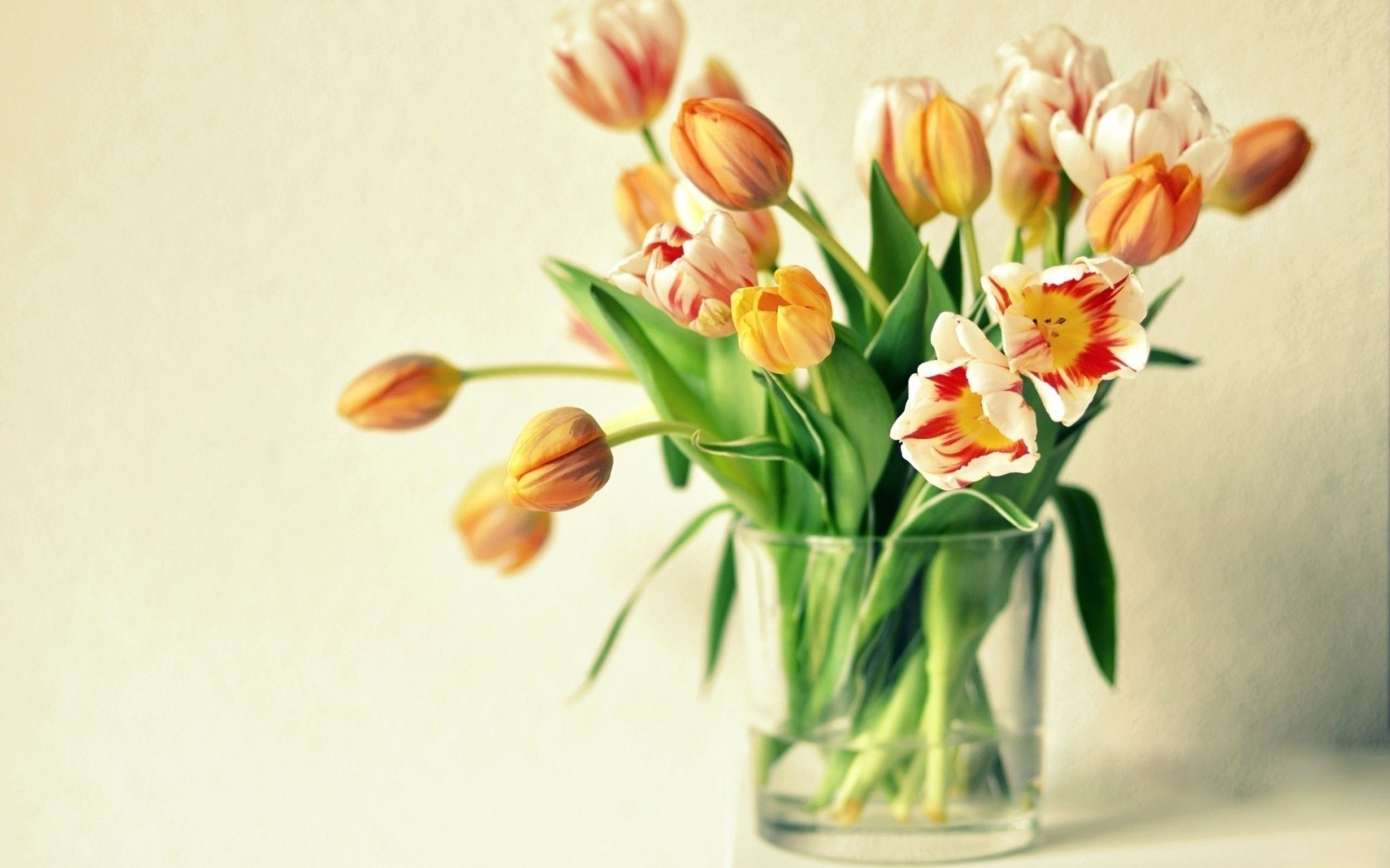 Vase Tulips Macro