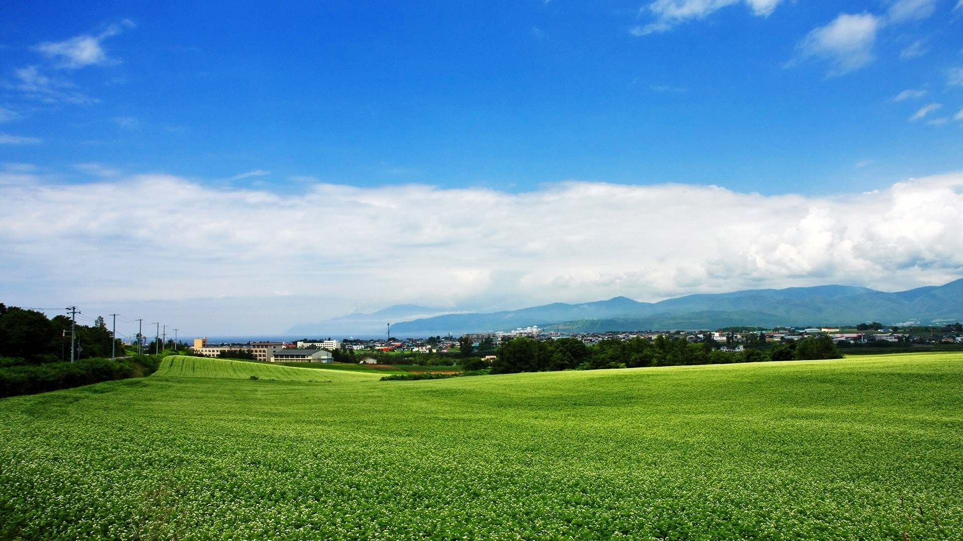 1920x1080 Wallpaper field, japan, plantation, summer, village