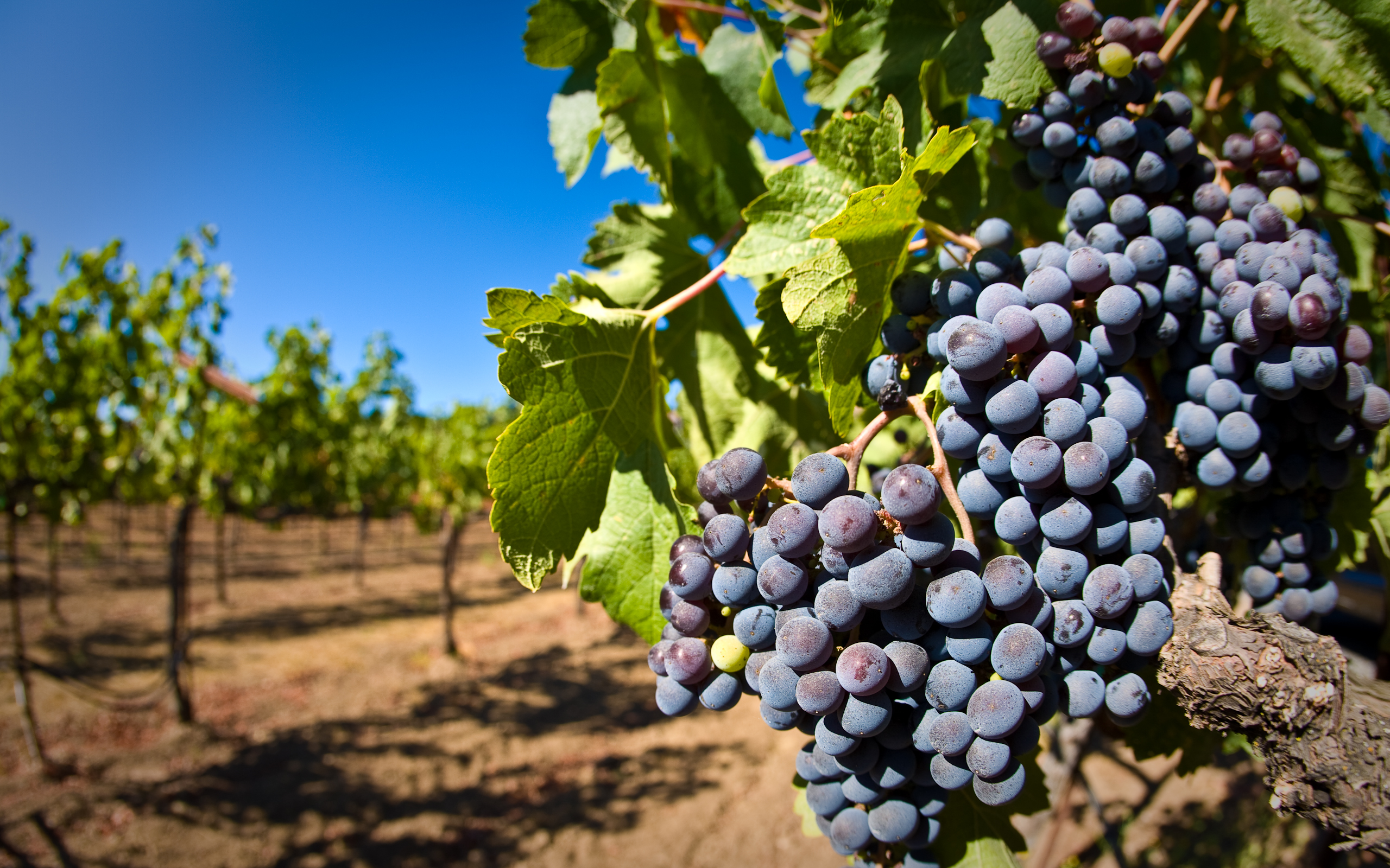 Santa Monica Mountains Vineyard Ban Approved