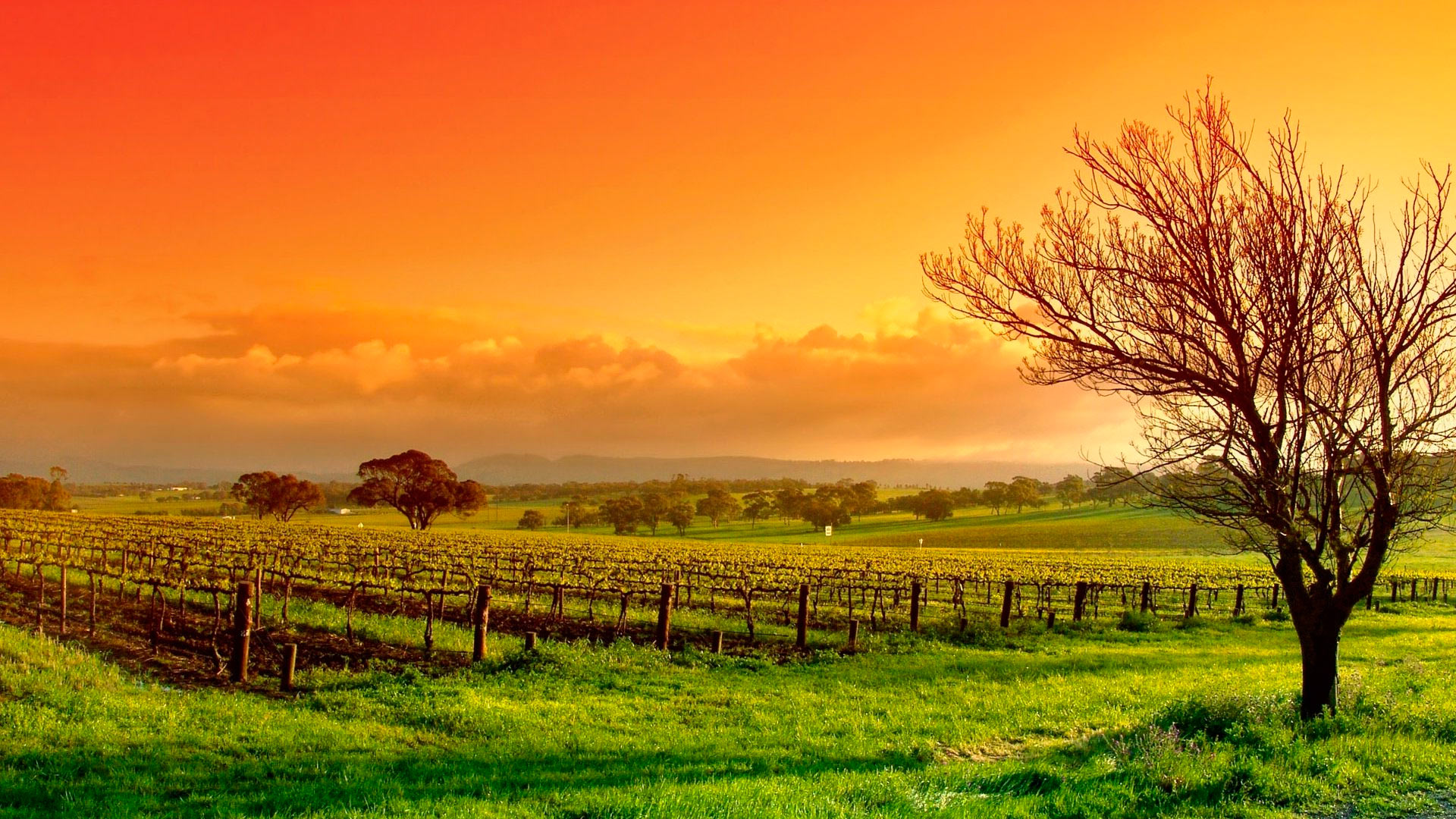 Vineyard Wallpaper 26360 1366x768 px