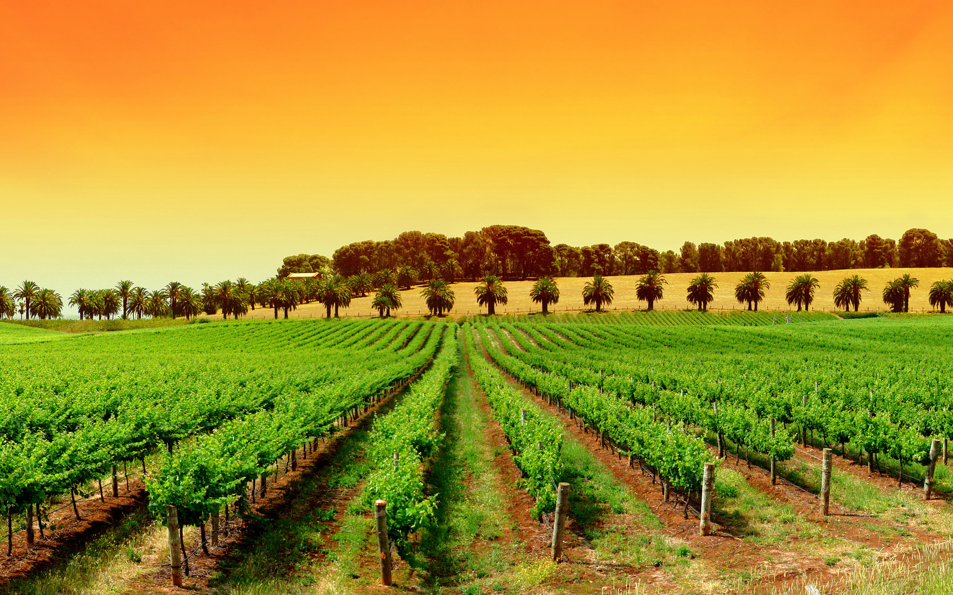 Amazing Vineyard Wallpaper