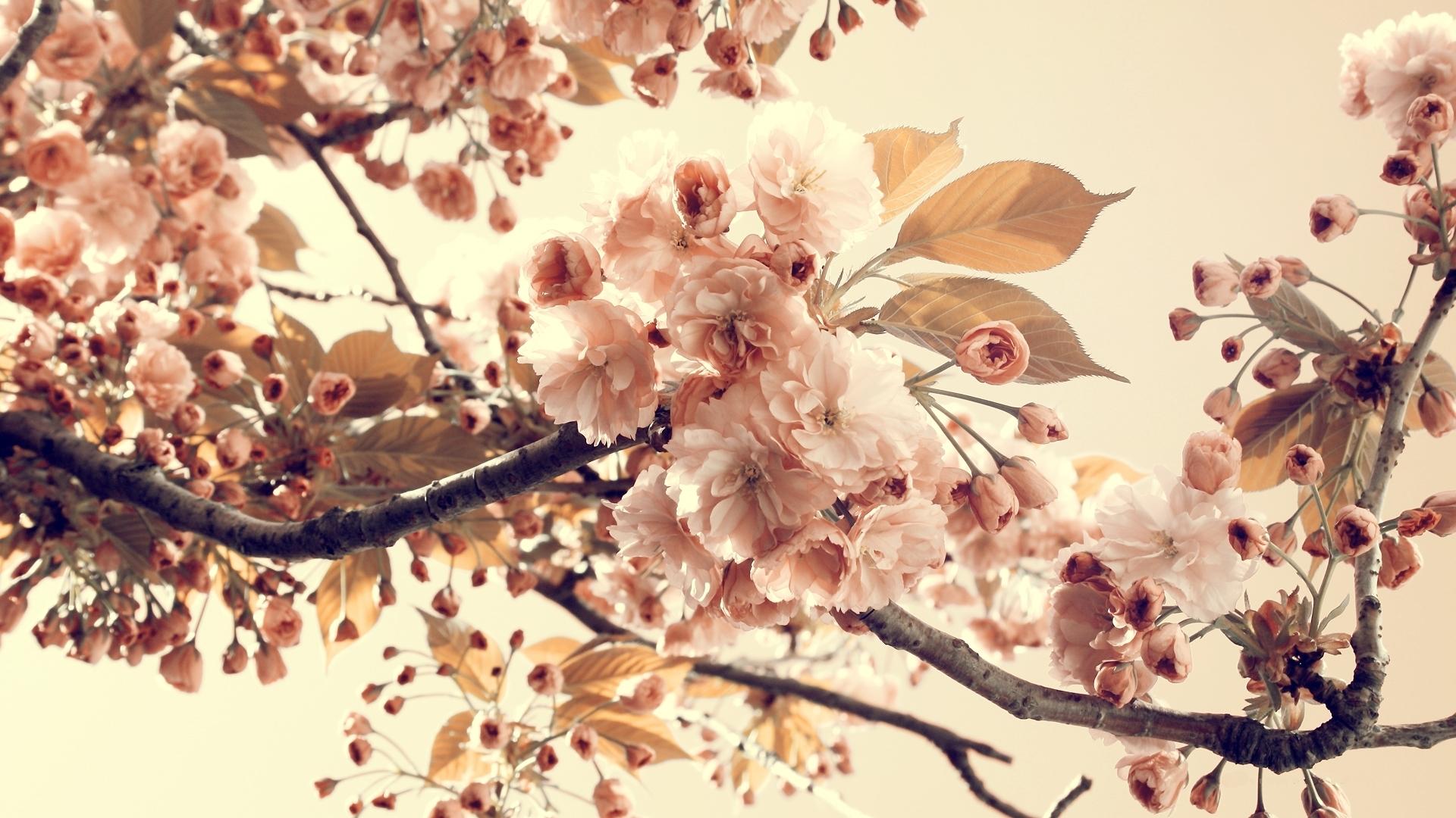 Flowers for Gt Vintage Flower Wallpaper