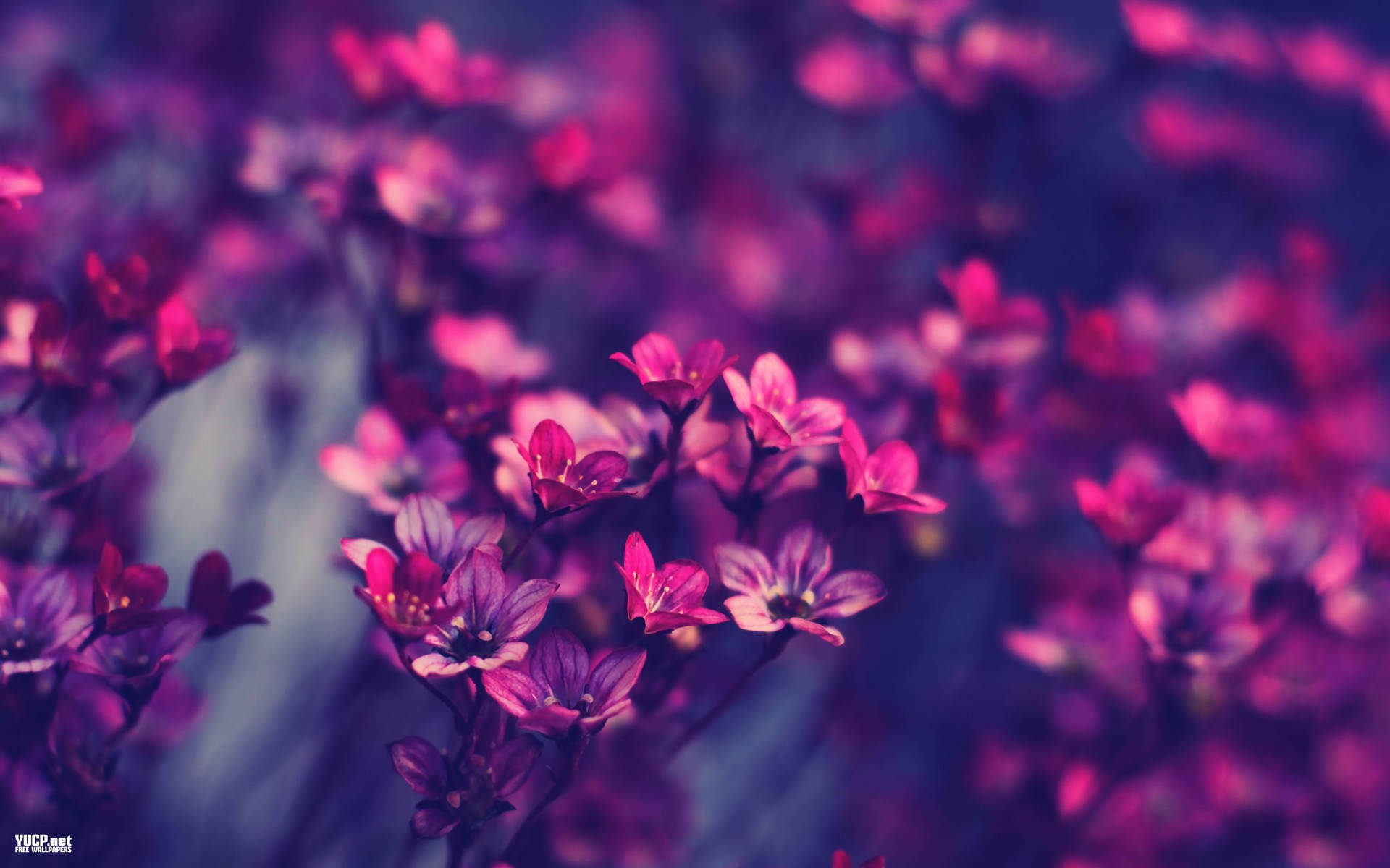 Vintage Flowers Wallpaper Free Download