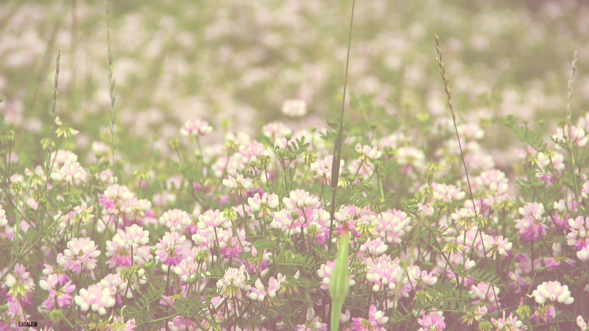 Vintage Flower Field Photography Hd Images 3 HD Wallpapers