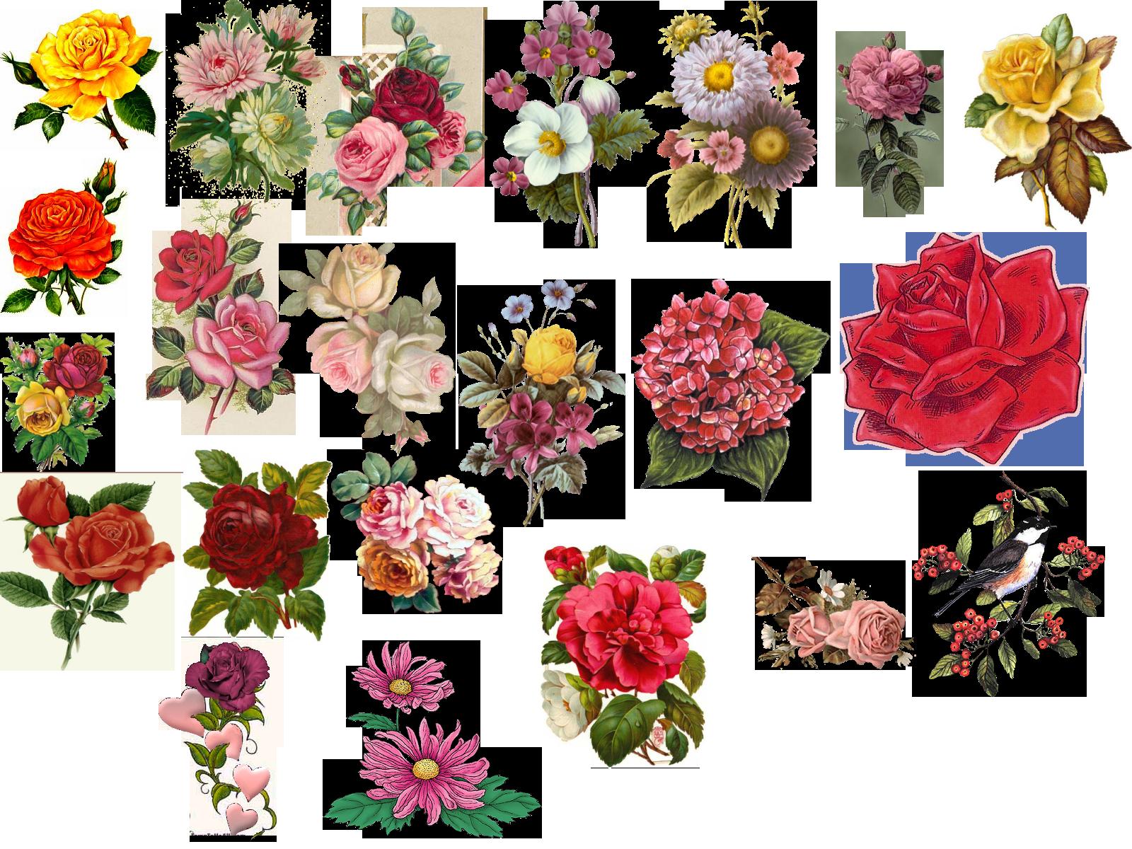 videoclip run free on Pinterest | Owl Illustration, Vintage Flowers and Vector Illustrations