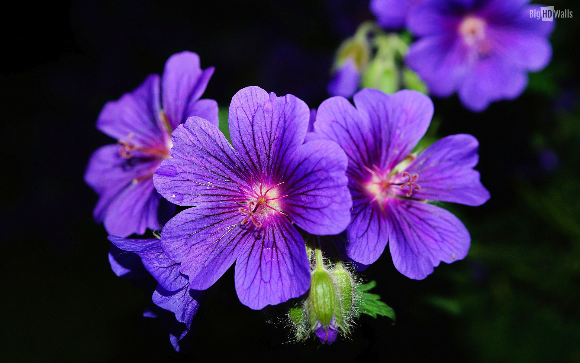 Violet Purple Flower Image