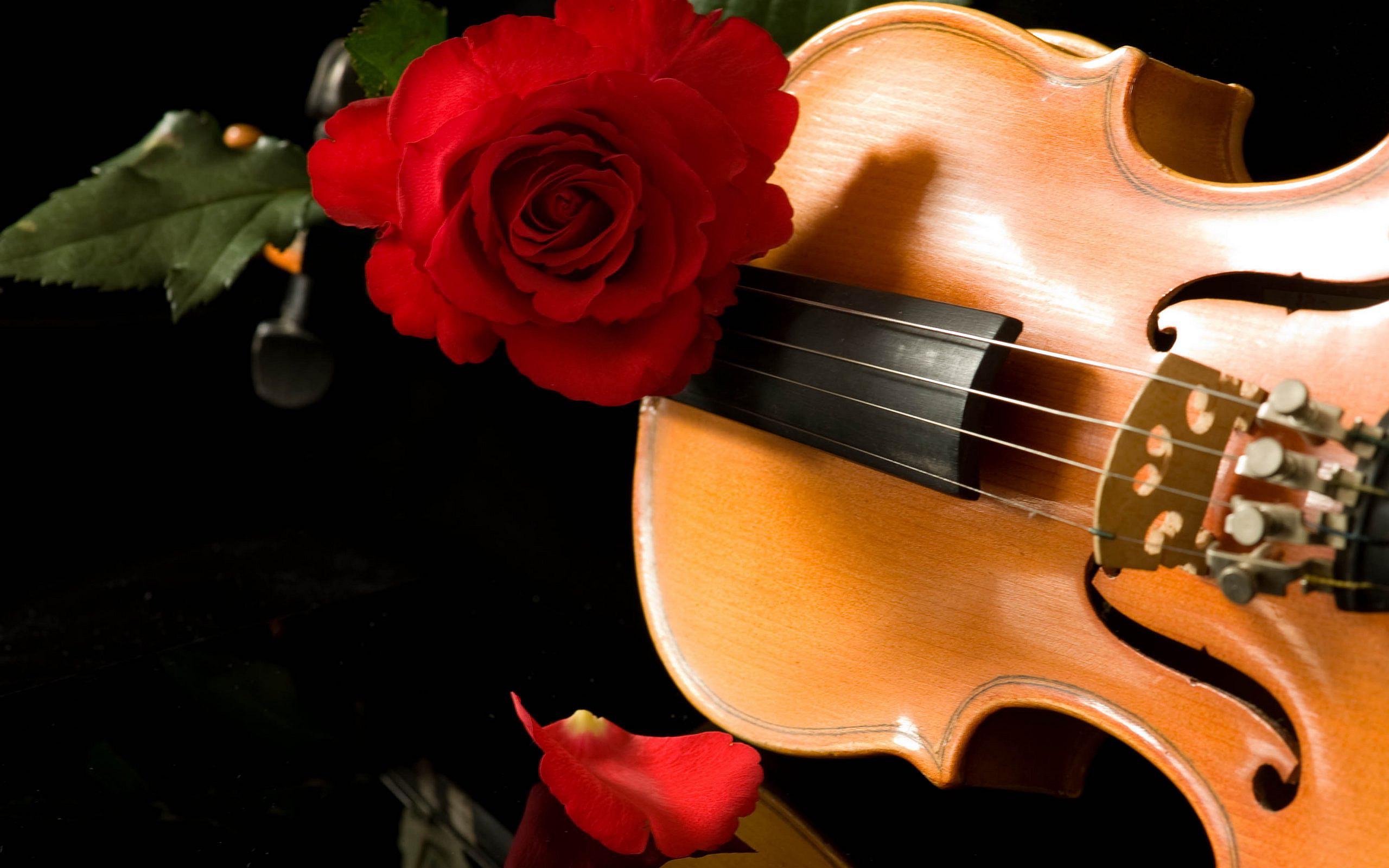 Violin Roses Wallpaper 2560x1600 28842