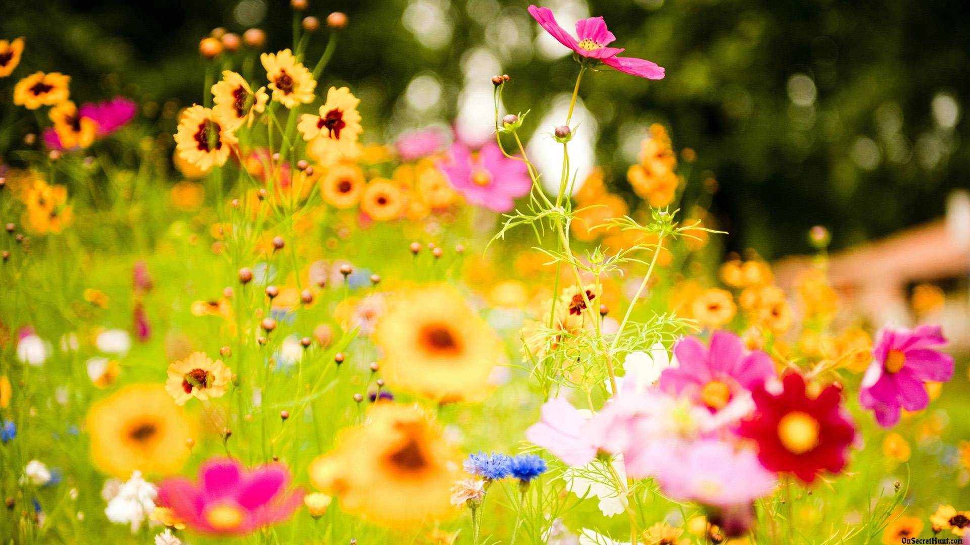 ... Wallpaper 6994481 Vivid Flowers Vivid Flowers 34856 1600x1000 Px Vivid Flowers
