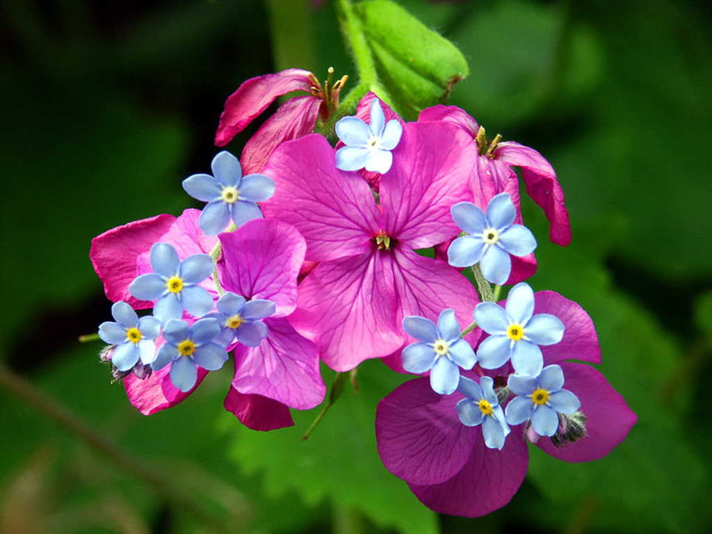 Vivid Purple Flowers Blue