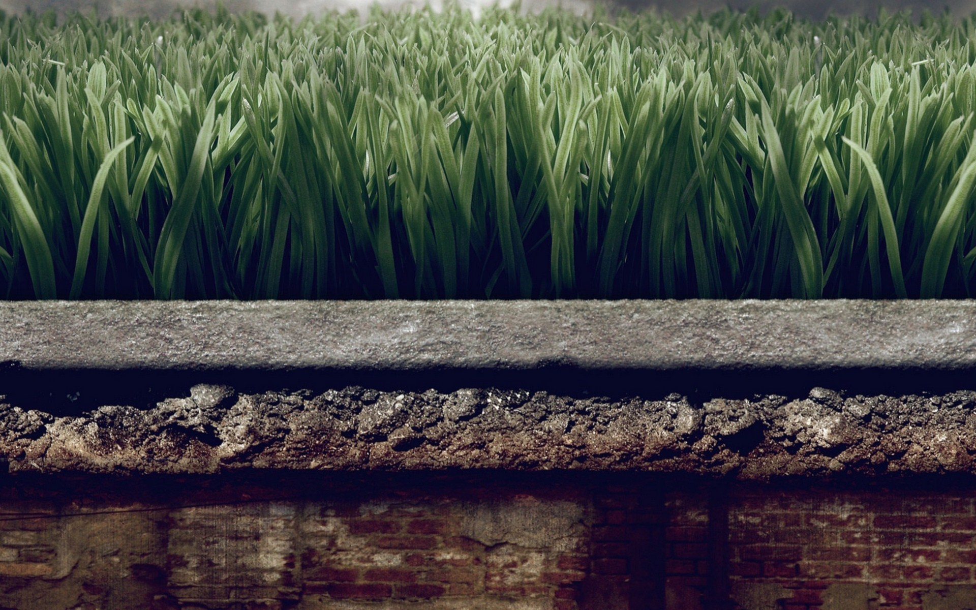 Wall Grass Turf Close-Up Photo