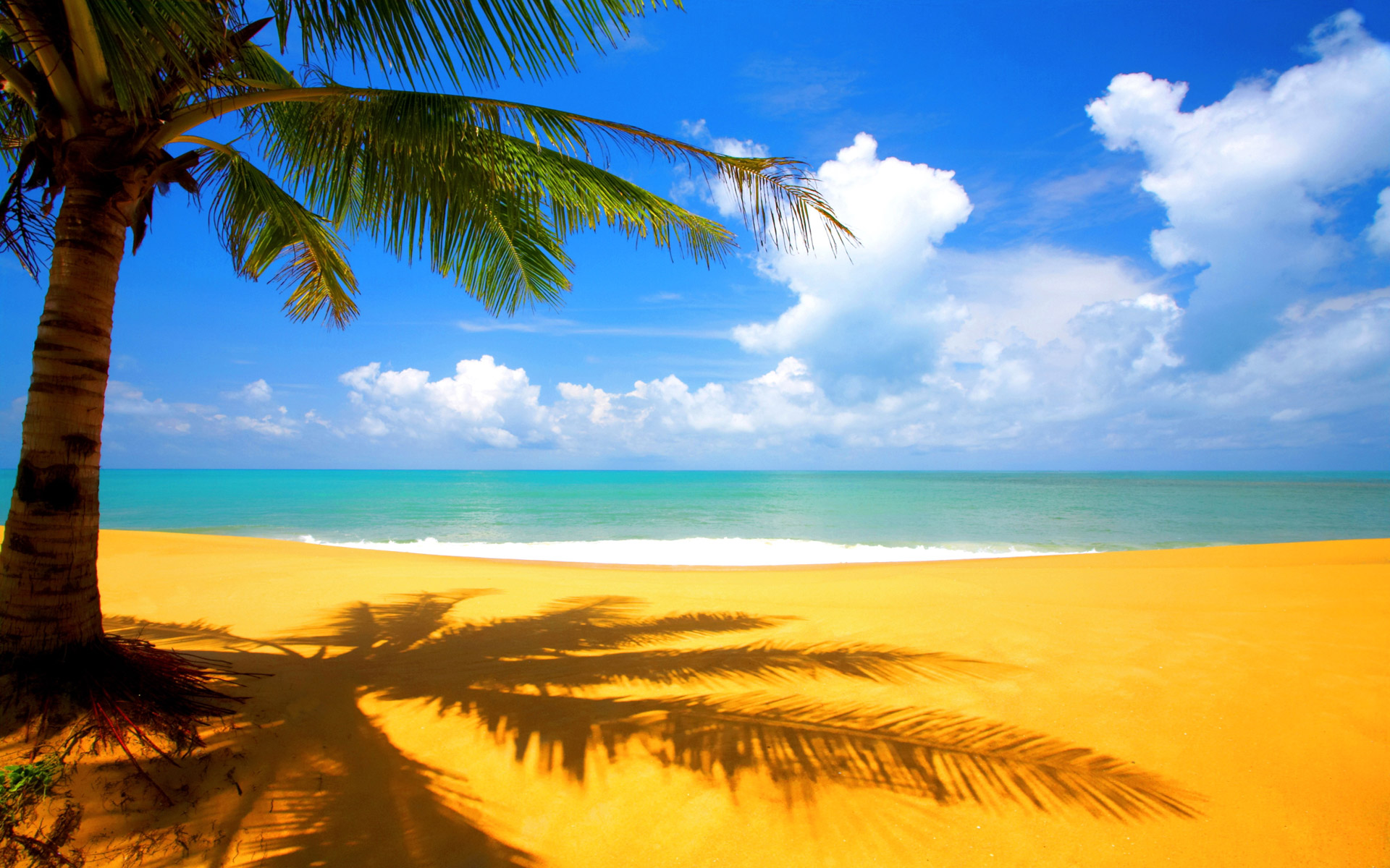 Tree Beach Side