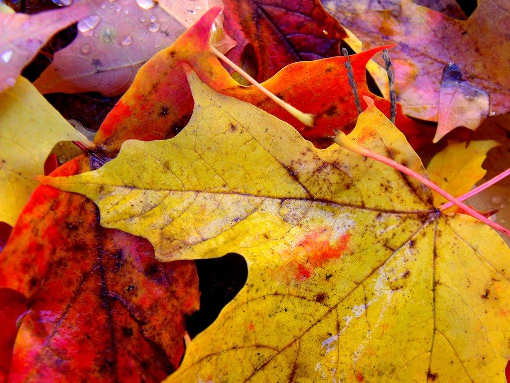 Warm Colors 34541 1600x1000 px
