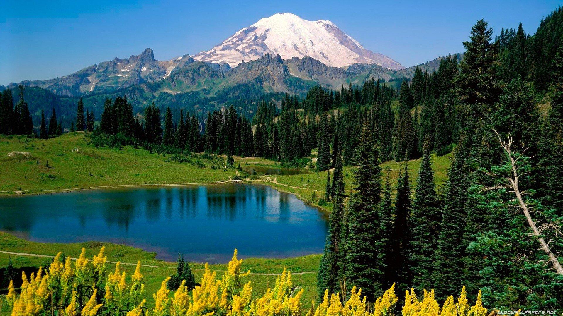 mountains landscapes nature forests National Park Mount Rainier Washington State wallpaper background