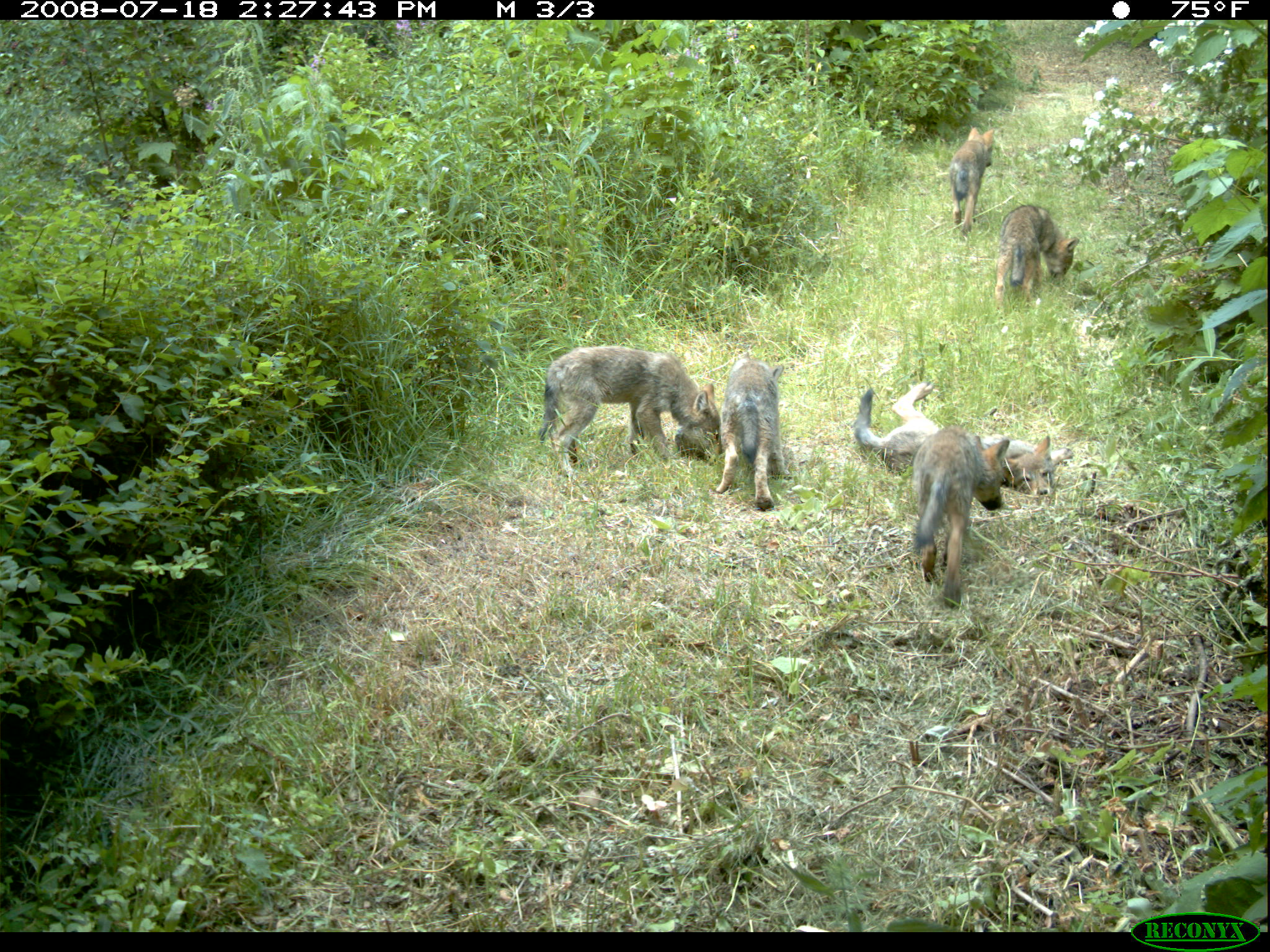 Wolf pack confirmed in Washington State.