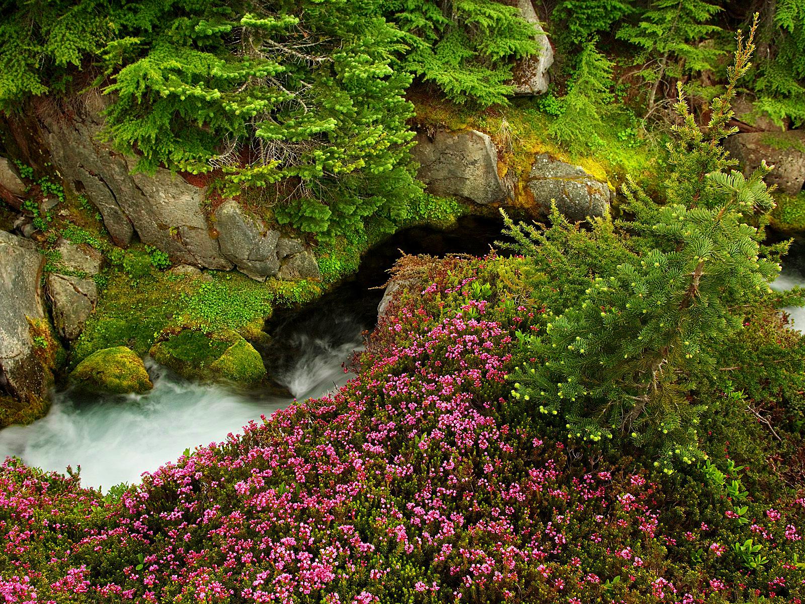 Washington State Wallpaper HD