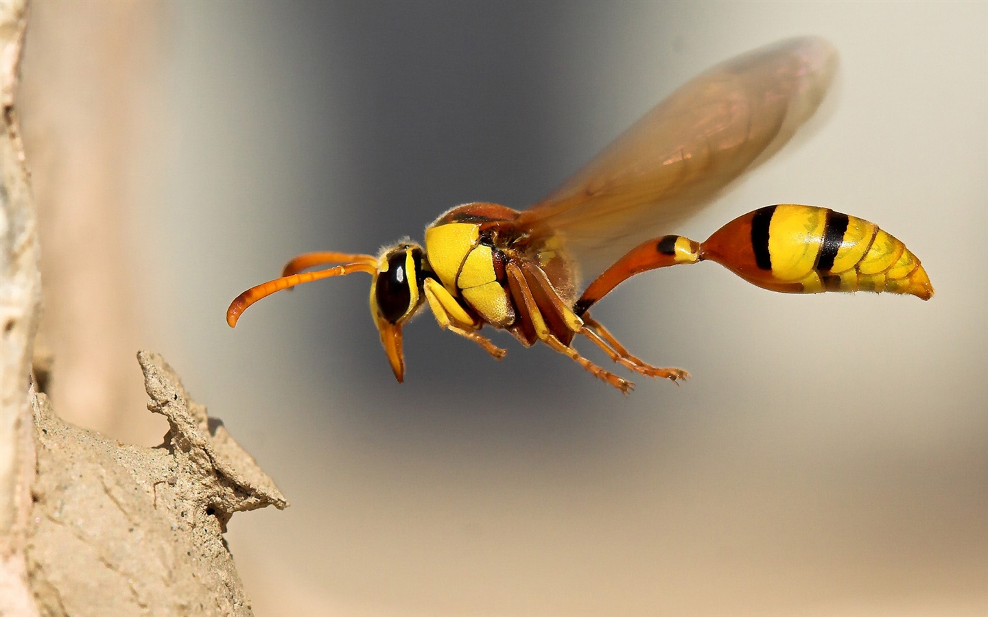Wasp Insect Close-Up