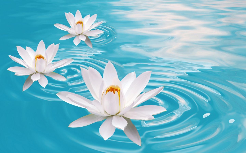 Water Flower 37534 1680x1050 px