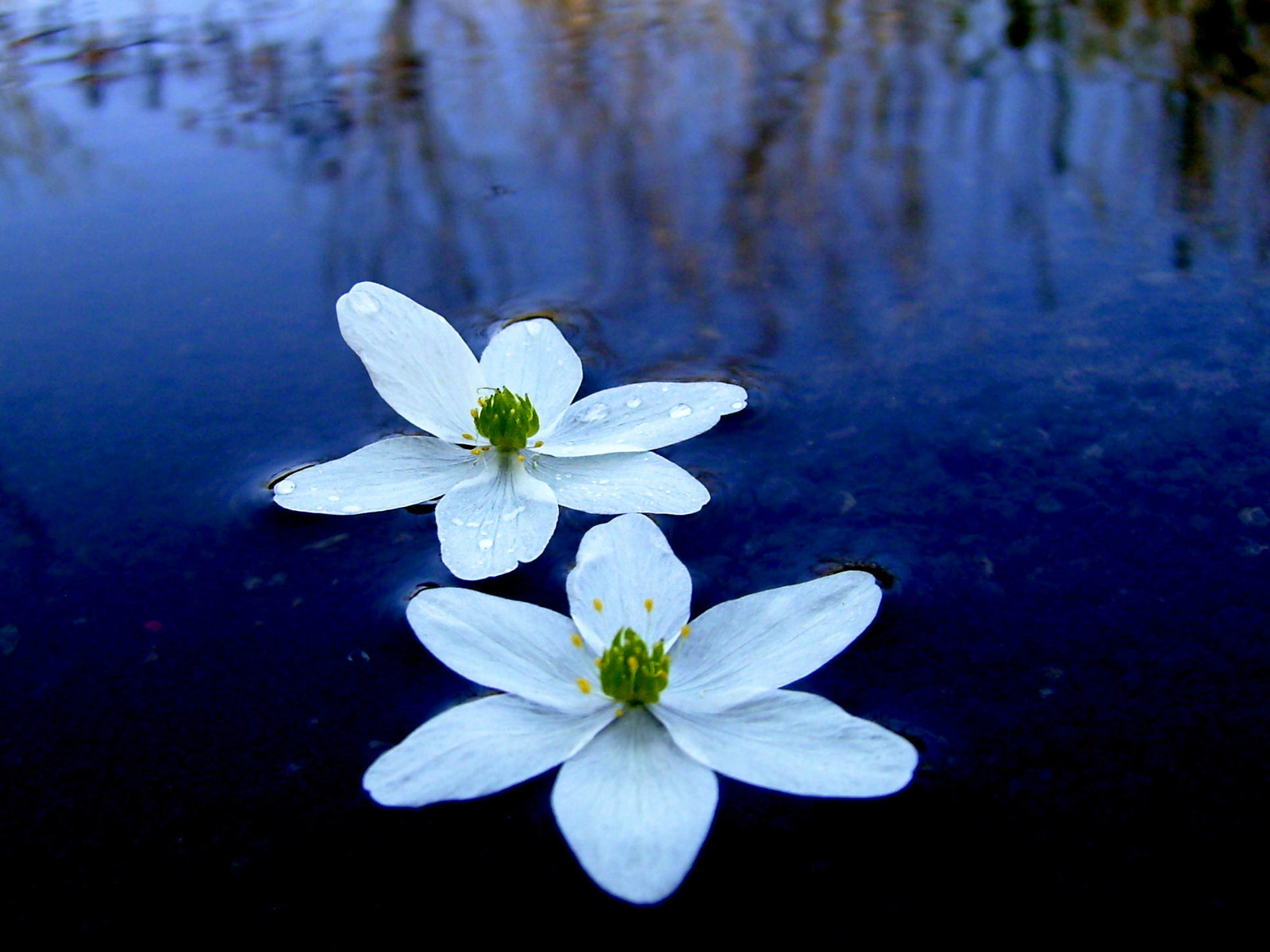Water flower wallpaper 1600x1200.
