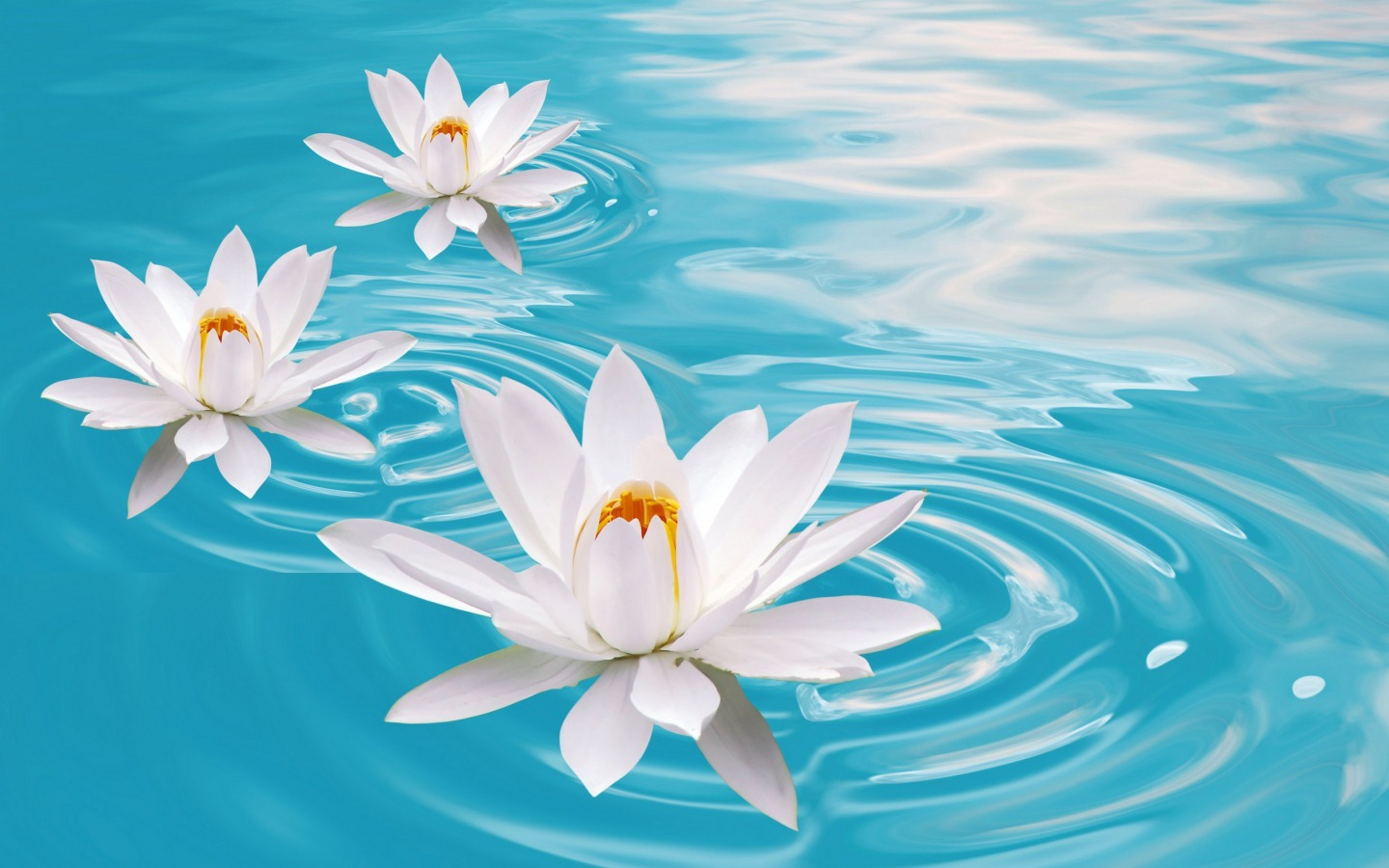 Water Flower Wallpaper