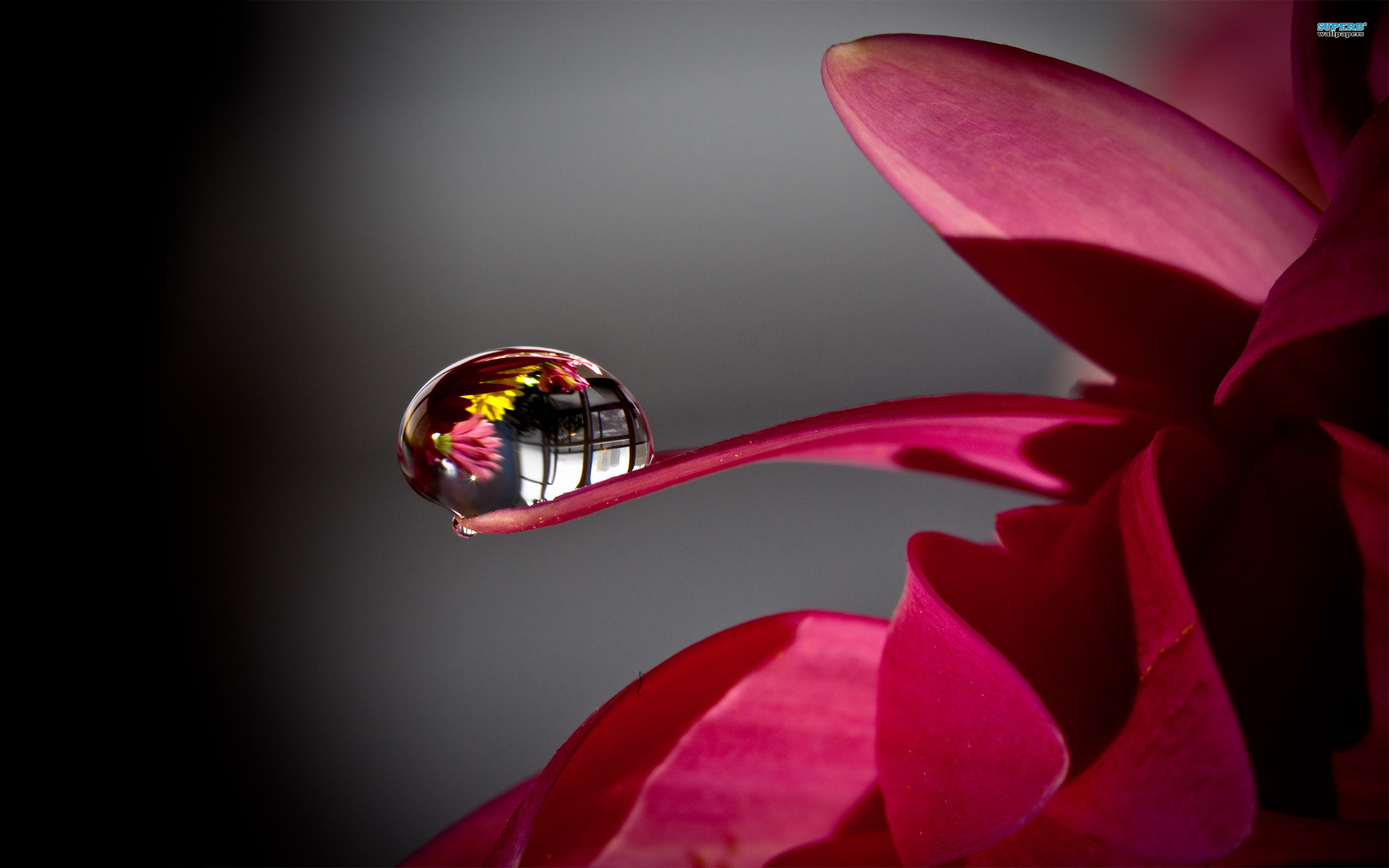 Water Drop On Flower Wallpaper Photography Wallpapers 2560x1600px