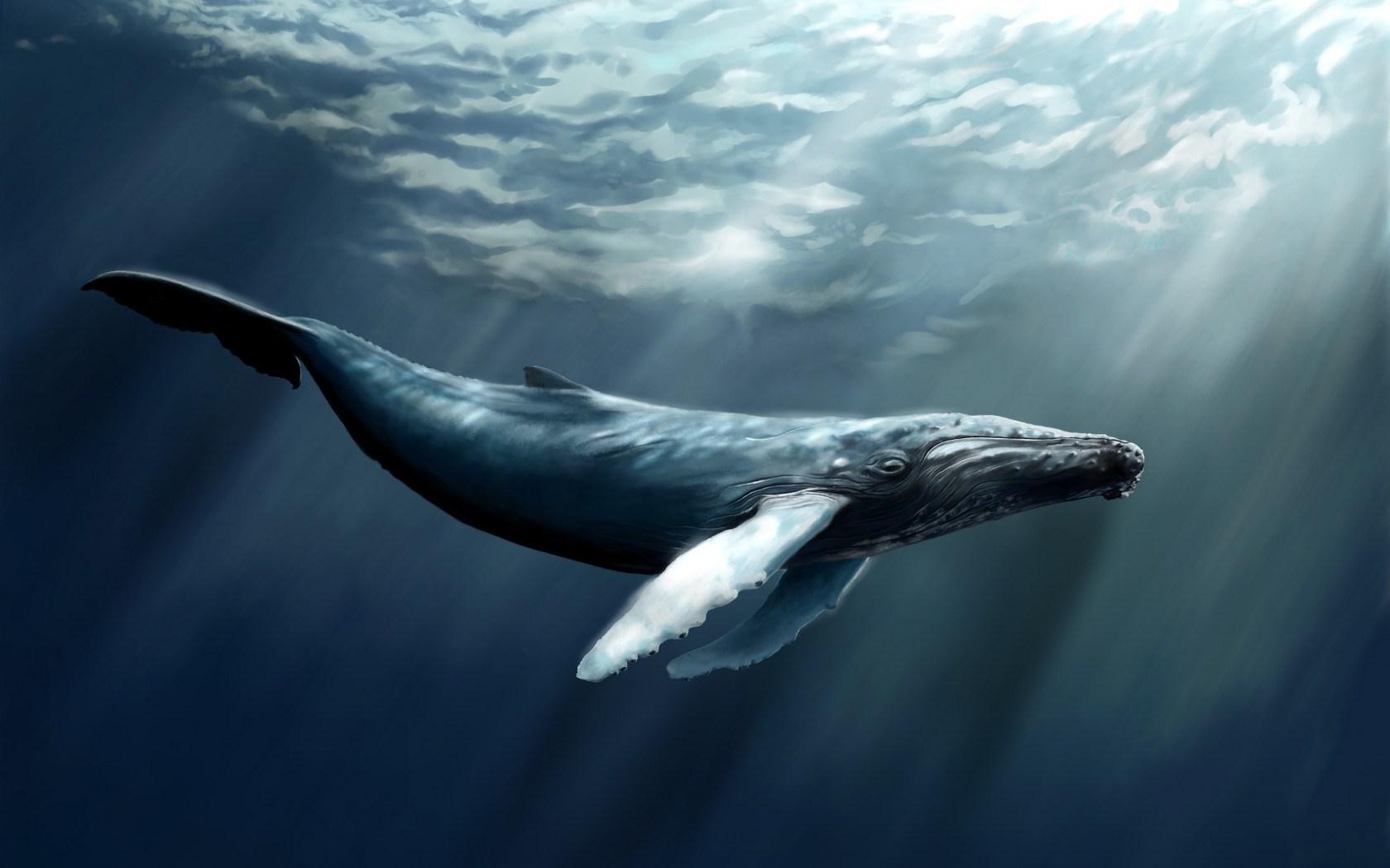 Water Whale Art