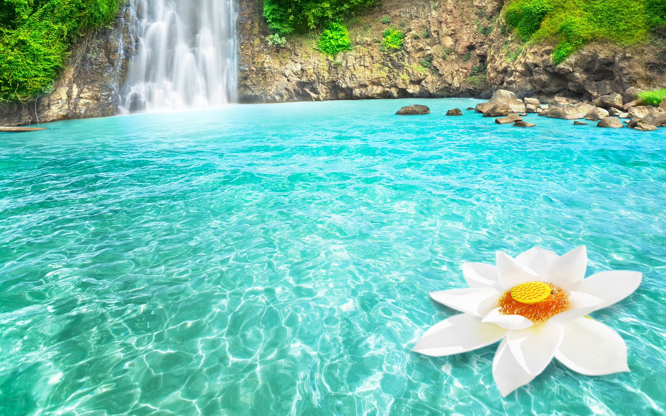 Waterfall Lotus Dream