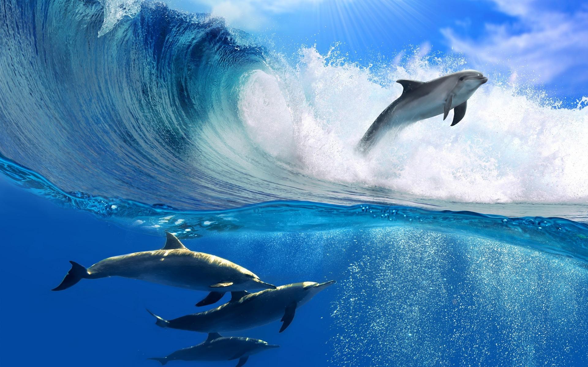 Free Wave Wallpaper